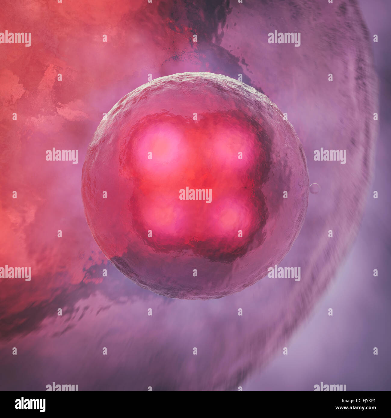 Cell division - Stock Image
