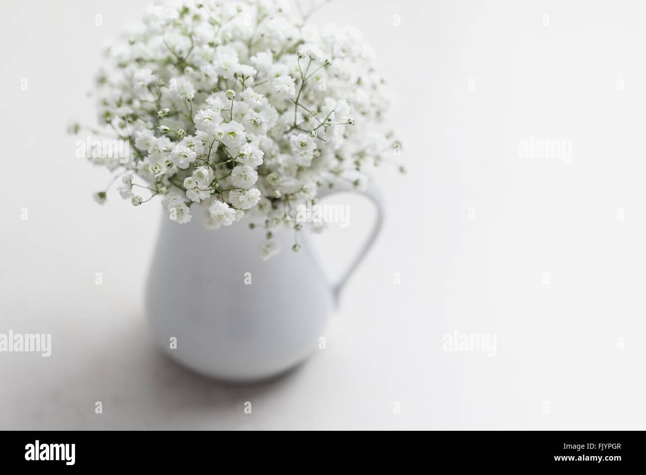 White baby's breath flowers (Gypsophila) in white vase - Stock Image