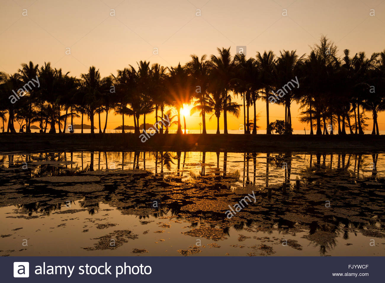 Coconut palms on the sandy beach of the tropical island. Koh Chang. Thailand. - Stock Image
