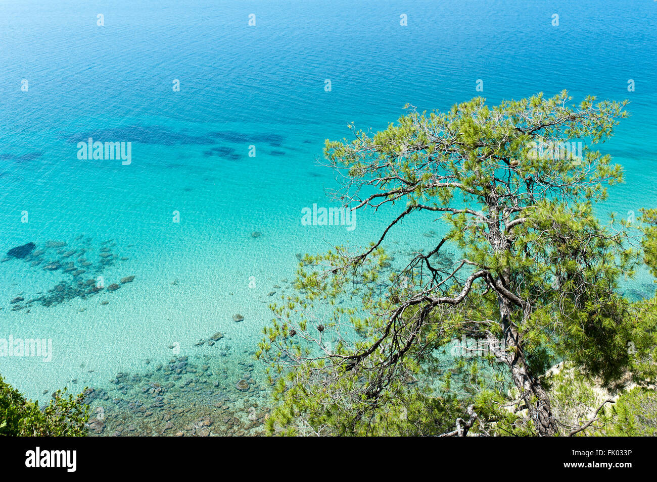 Turquoise clear water, sea, Aleppo pine (Pinus halepensis), Thermaic Gulf, near Sani, Kassandra region, Chalcidice, Stock Photo