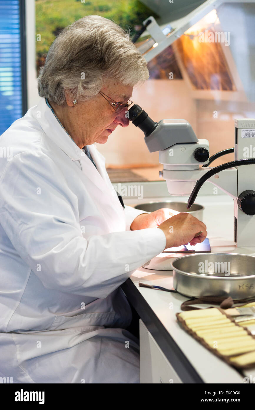 Kew Millennium Seedbank, West Sussex, UK. A female scientist working at a microscope. - Stock Image
