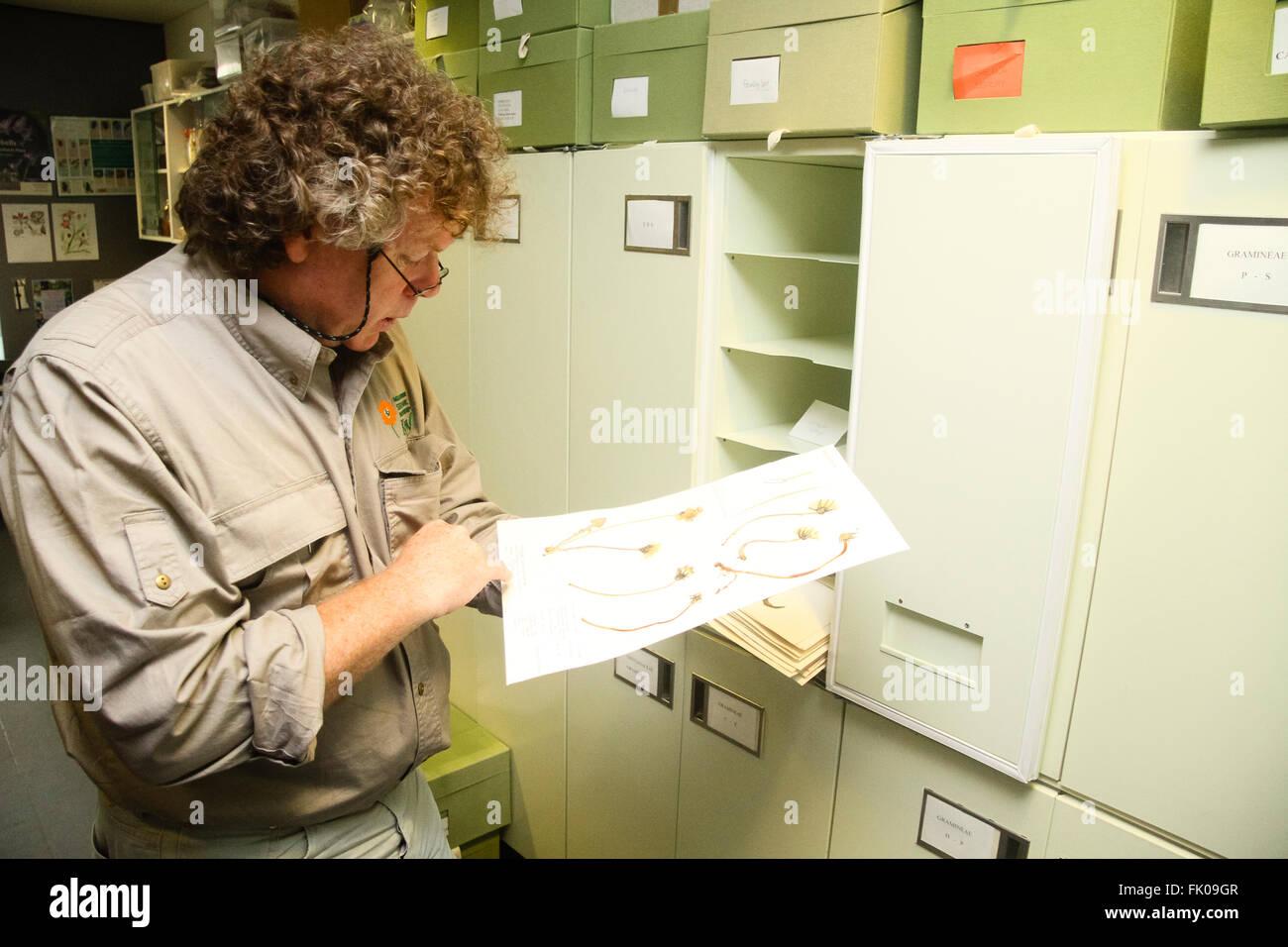Kew Millennium Seedbank, West Sussex, UK. Scientist Tim Pearce studies a sample of seeds. - Stock Image
