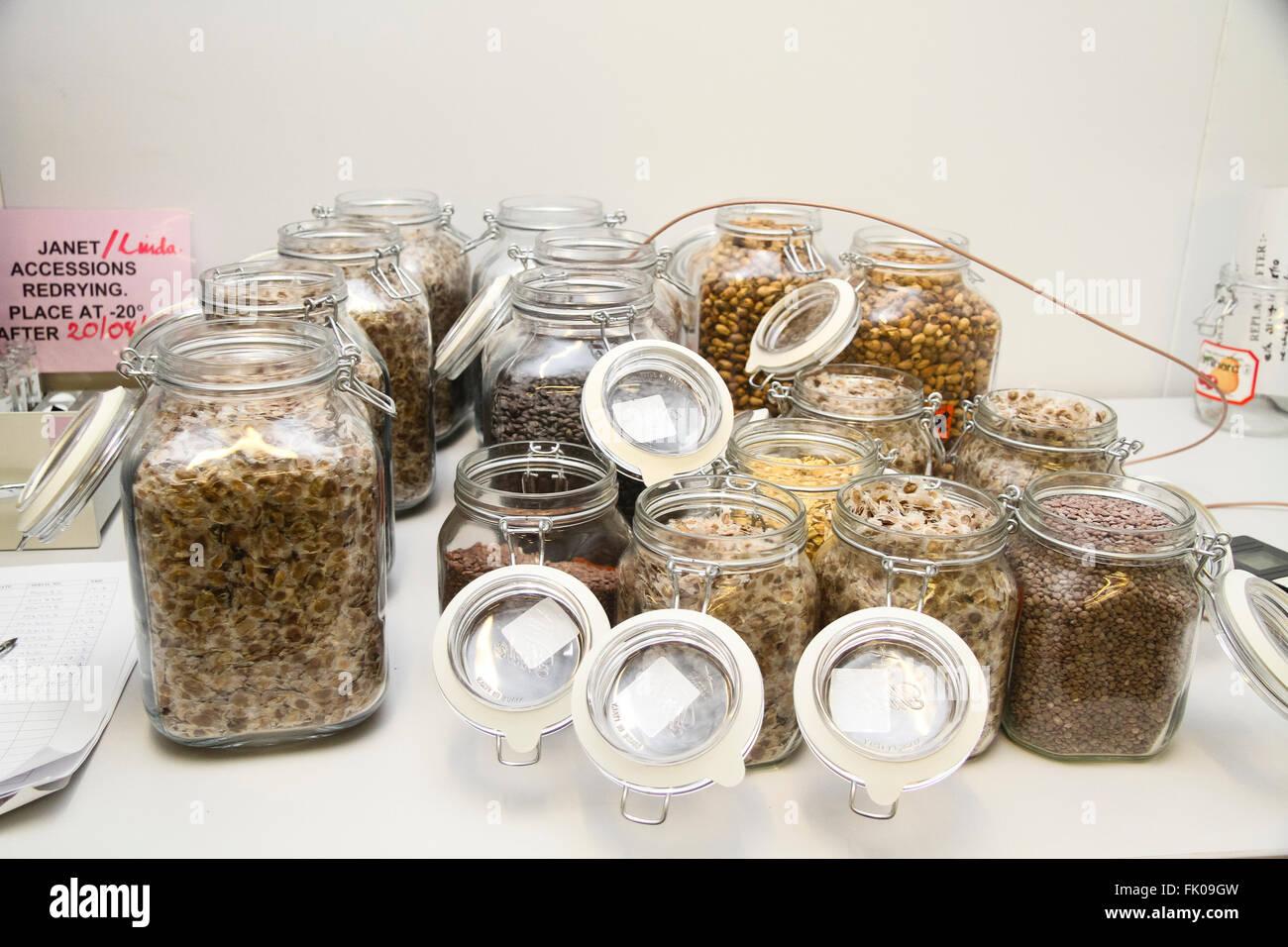 Kew Millennium Seedbank, West Sussex, UK. Kilner jars full of seeds. - Stock Image