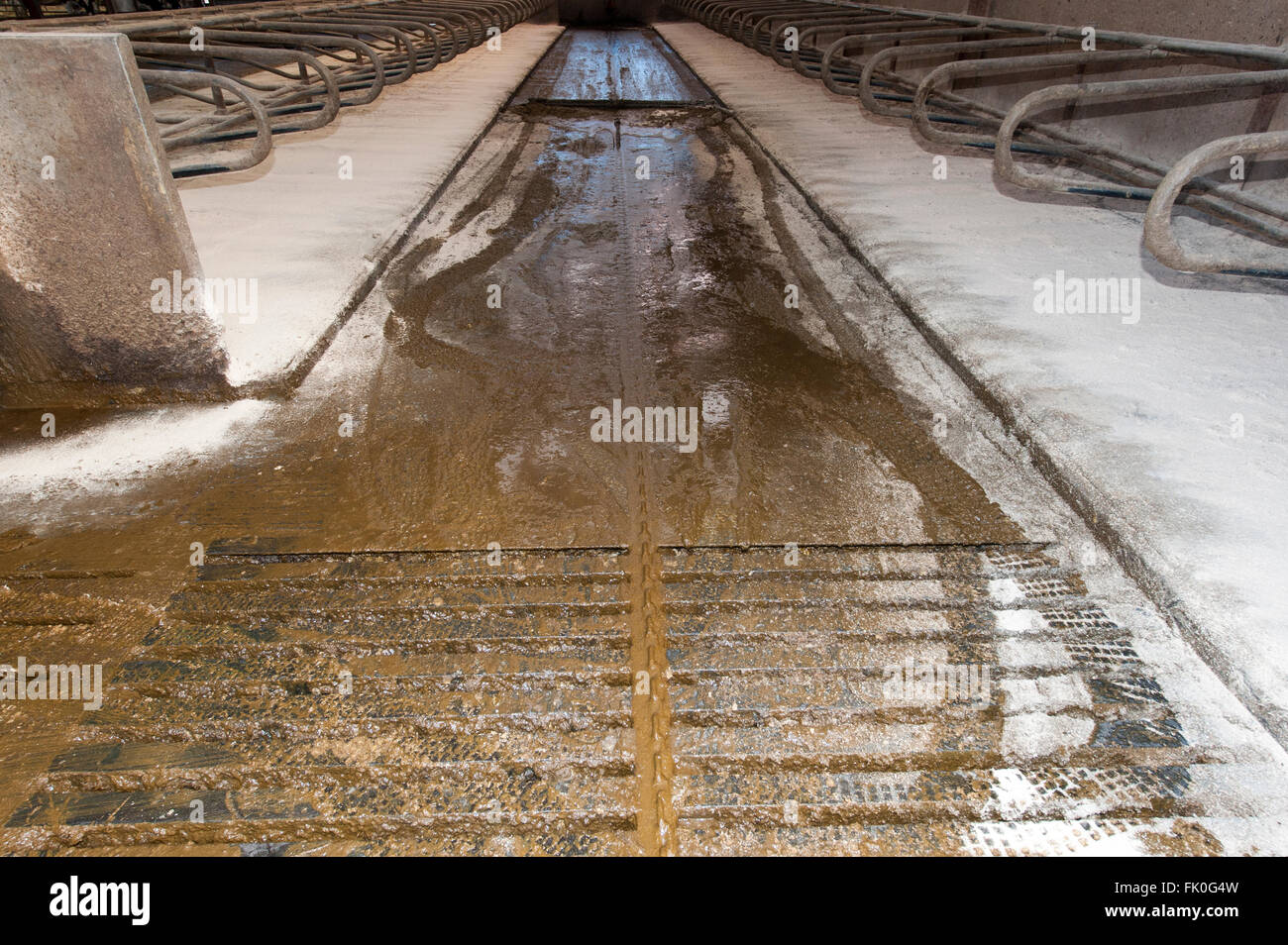 Cow Shed Uk Stock Photos Amp Cow Shed Uk Stock Images Alamy