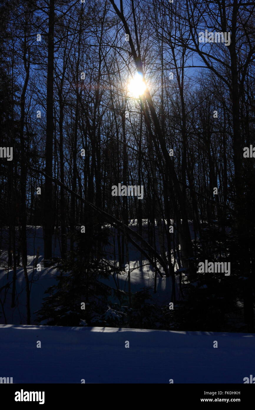 Sun beaming through the bare tree branches in Gatineau Park, Quebec, February 26, 2016 - Stock Image