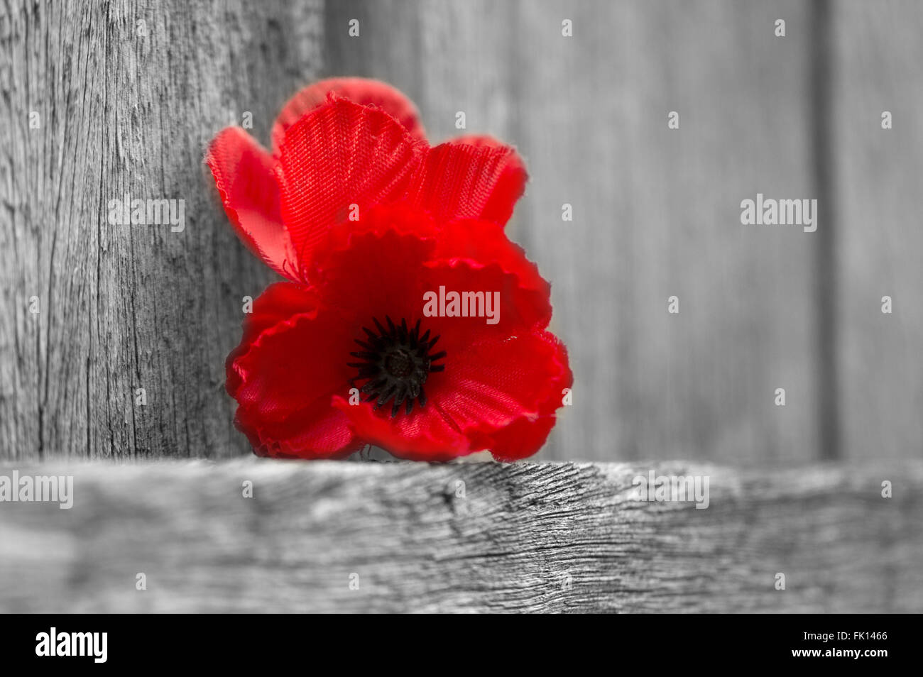 Red poppy flowers for remembrance day lest we forget stock photo red poppy flowers for remembrance day lest we forget mightylinksfo