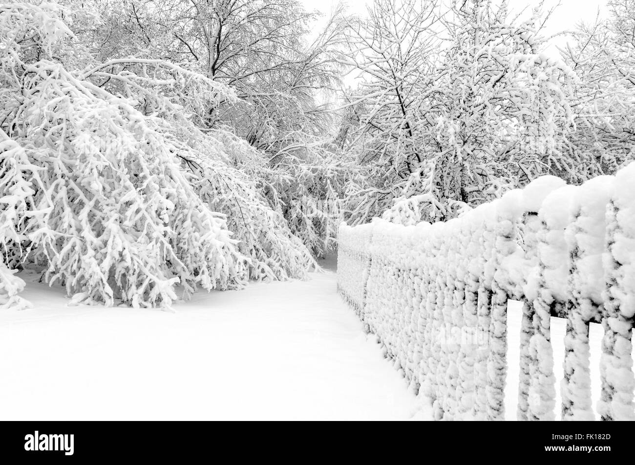 Winter with snow on trees after storm Stock Photo