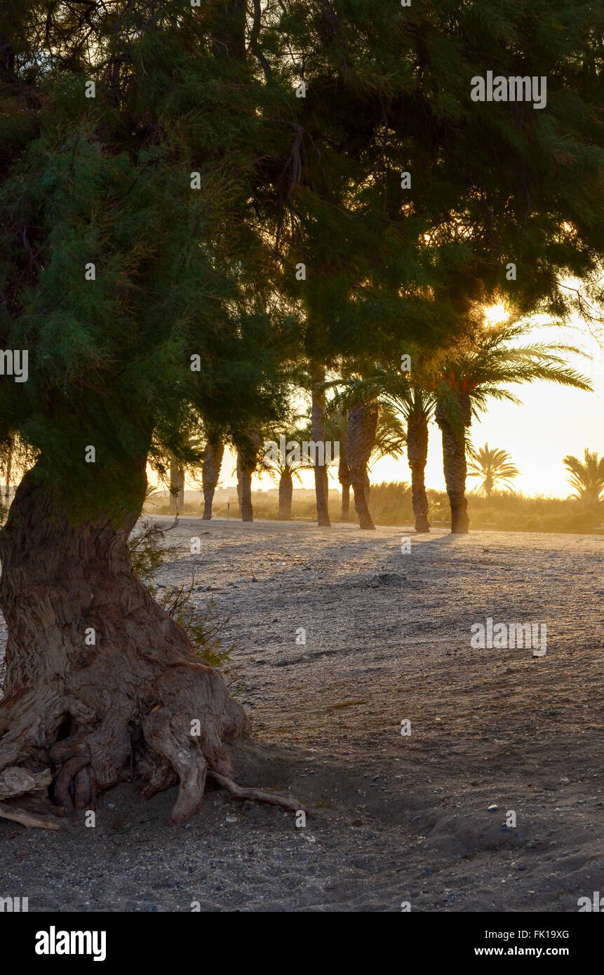 Sunsetting through the trees - Stock Image