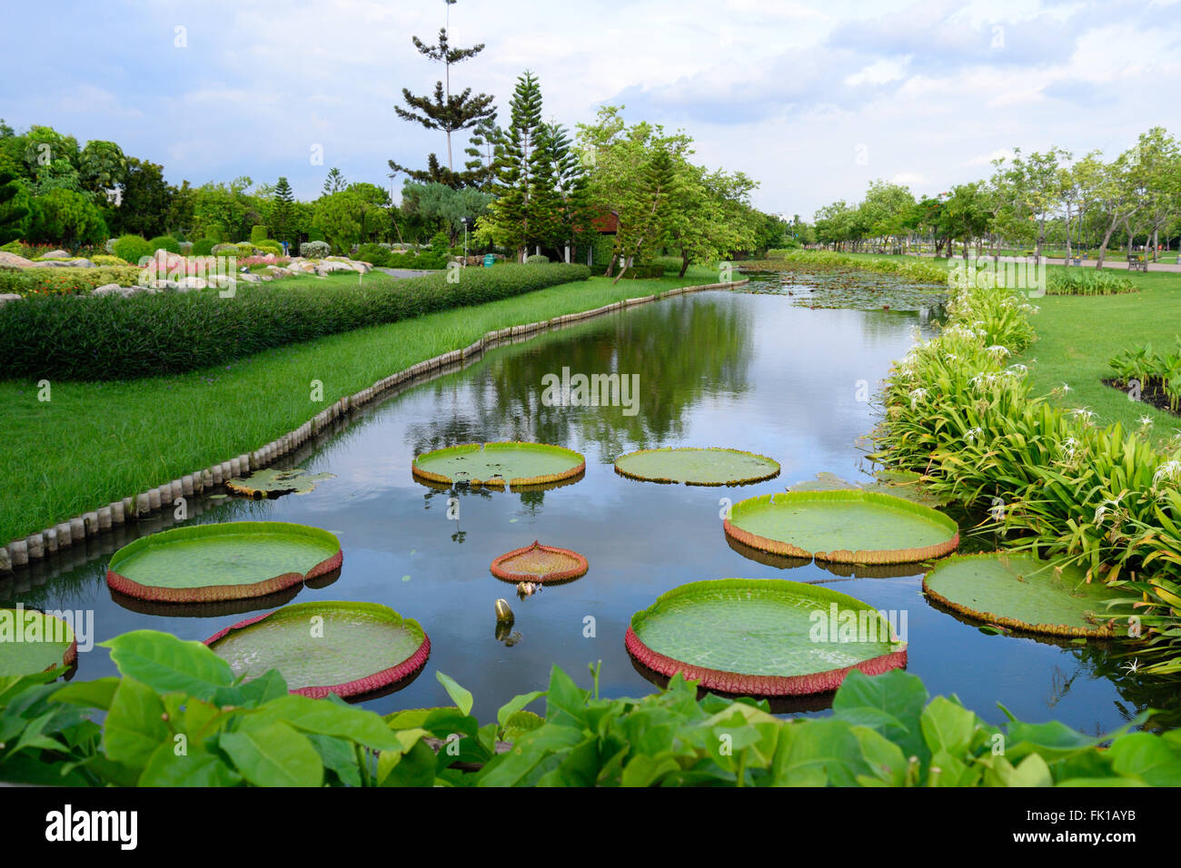 A River with large lilies in on a summer's day, King's park, Bangkok Stock Photo
