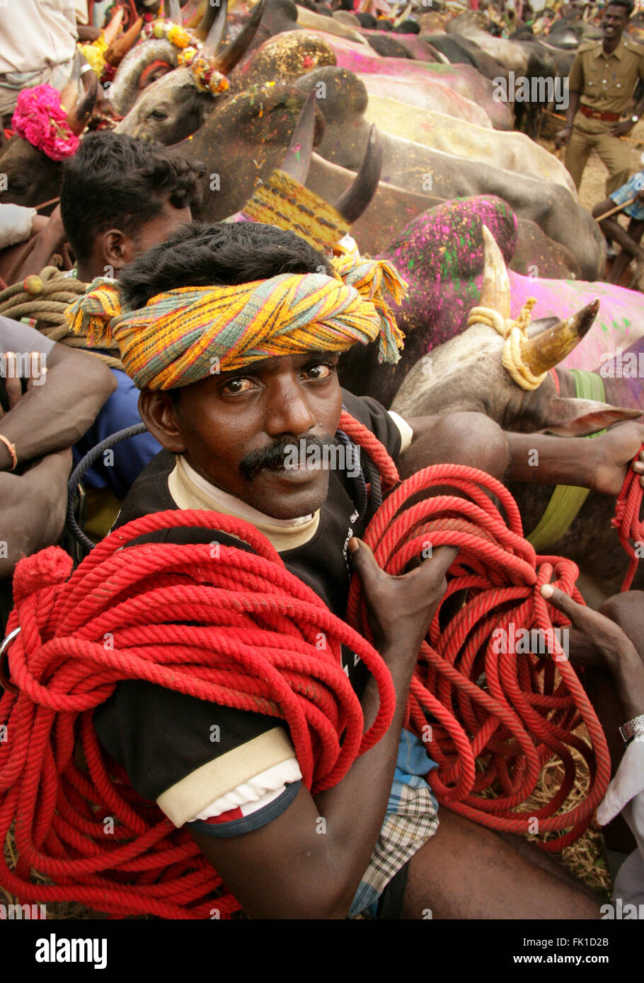 Portrait of a Jallikattu Bull Tamer.Jallikattu is held in the villages of Tamil Nadu as a part of the village harvest - Stock Image
