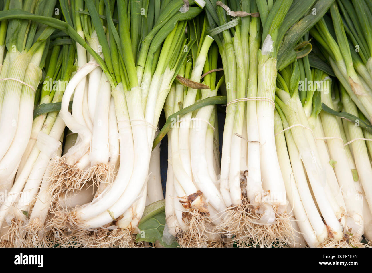 chives - Stock Image