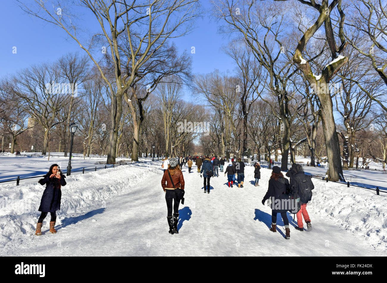 New York City - January 24, 2016: People exploring Central Park in New York City, following a major snowstorm in - Stock Image