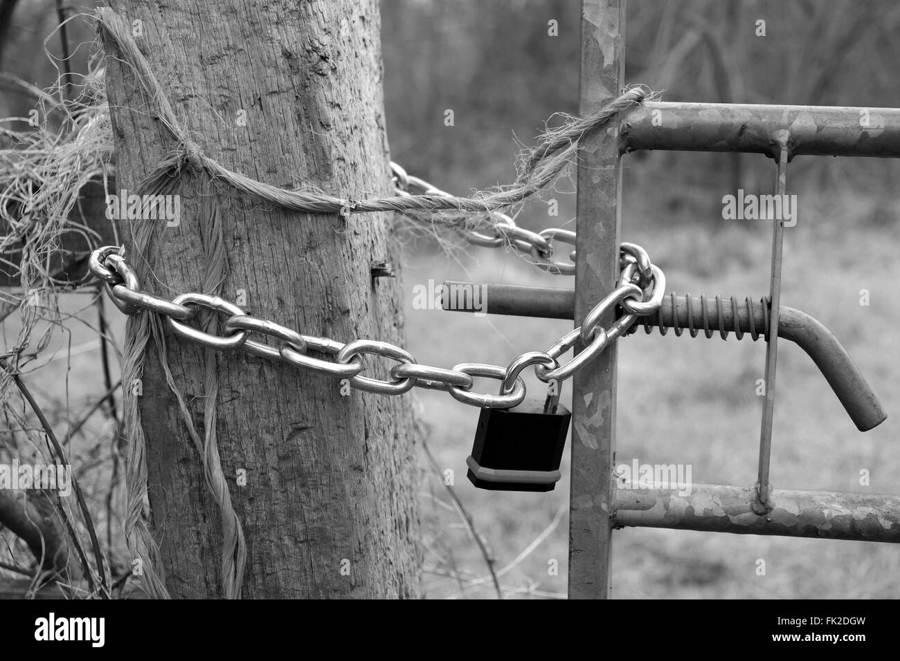 Padlocked gate to a field, March 2016 Stock Photo