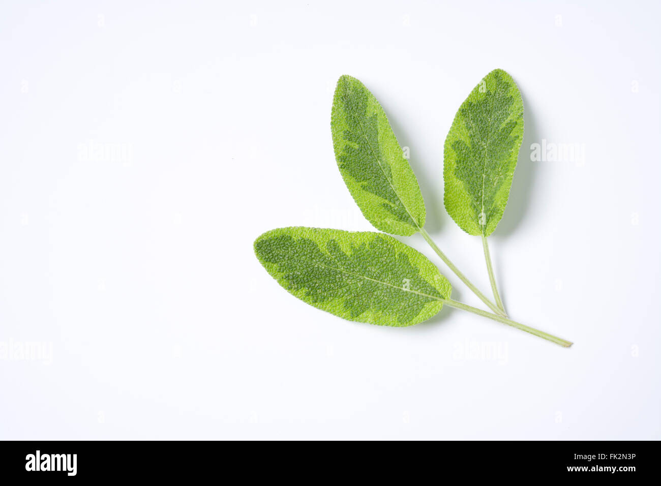Fresh Green Salvia Officinalis Leaves On White Background - Stock Image