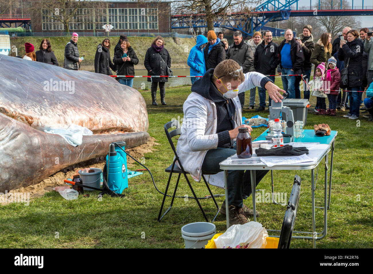 Stranded whale, an art performance during Duisburger Akzente, an Art festival in Duisburg, Germany, at river Rhine, - Stock Image