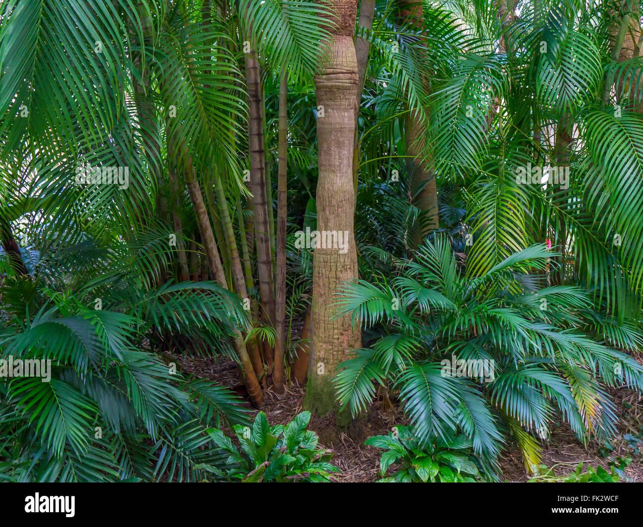 Tropical plants in Sunken Gardens in St Petersburg Florida - Stock Image