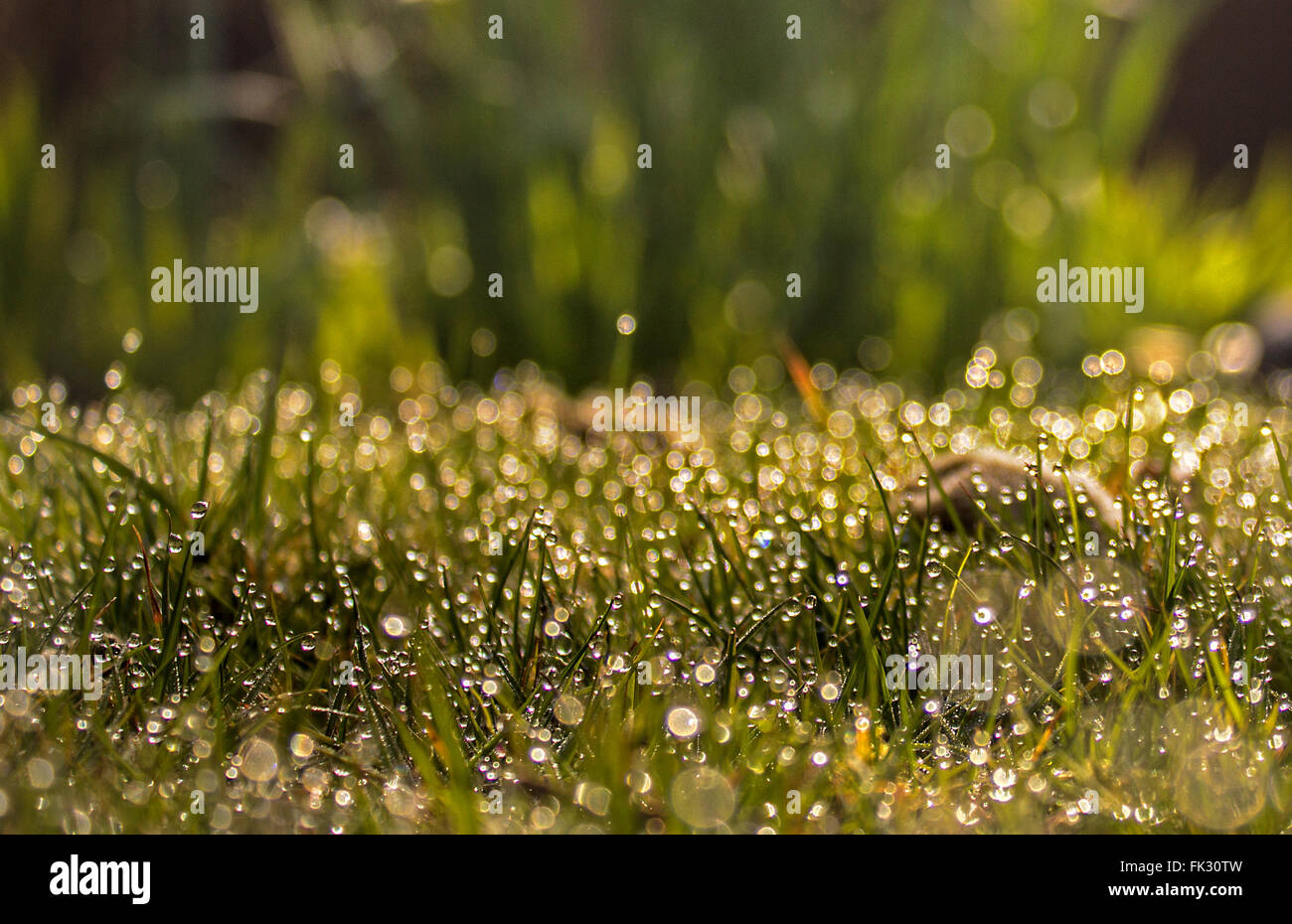 dewdrops on grass - Stock Image