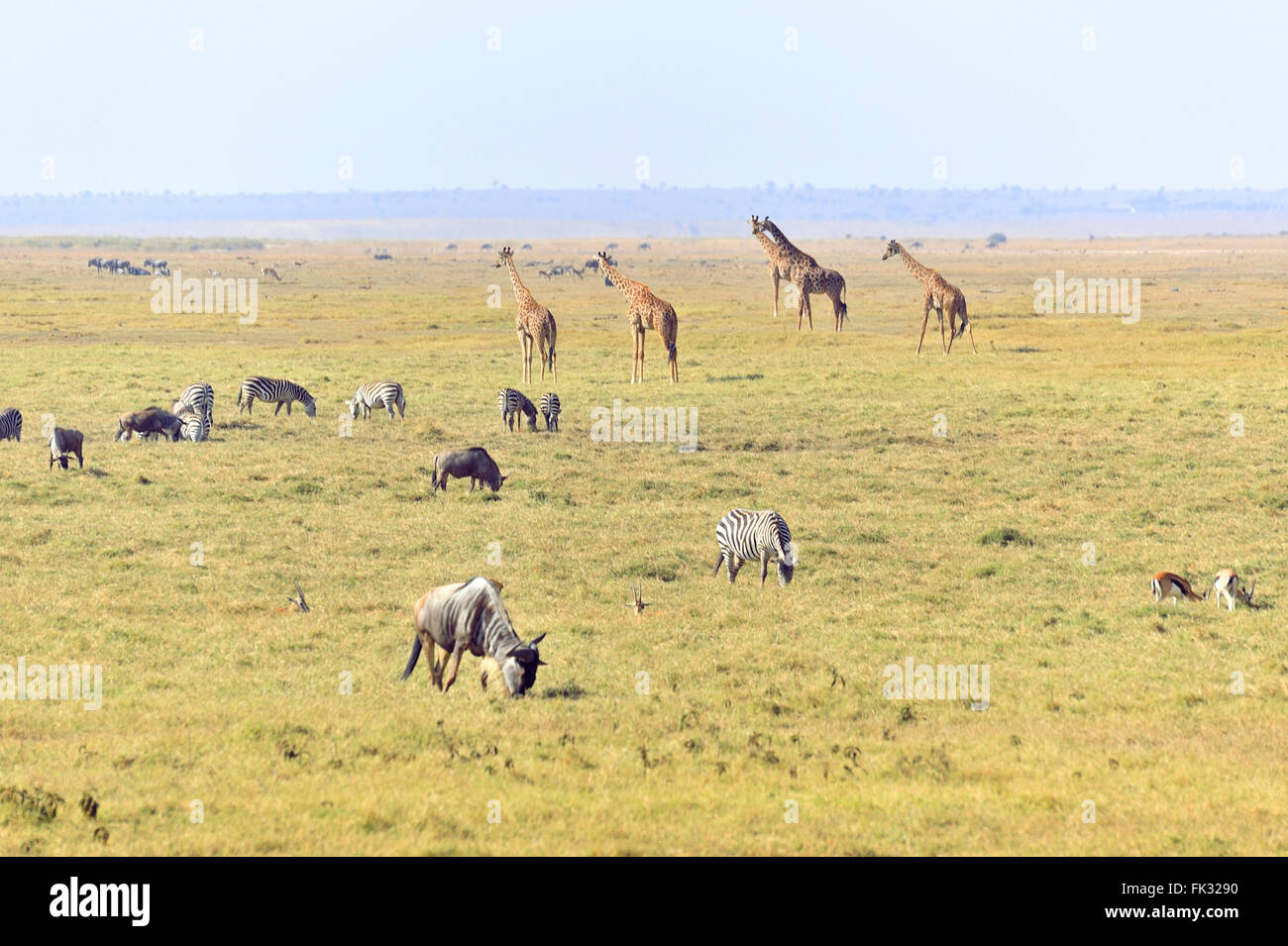 African Savannah with different animals, Kenya - Stock Image