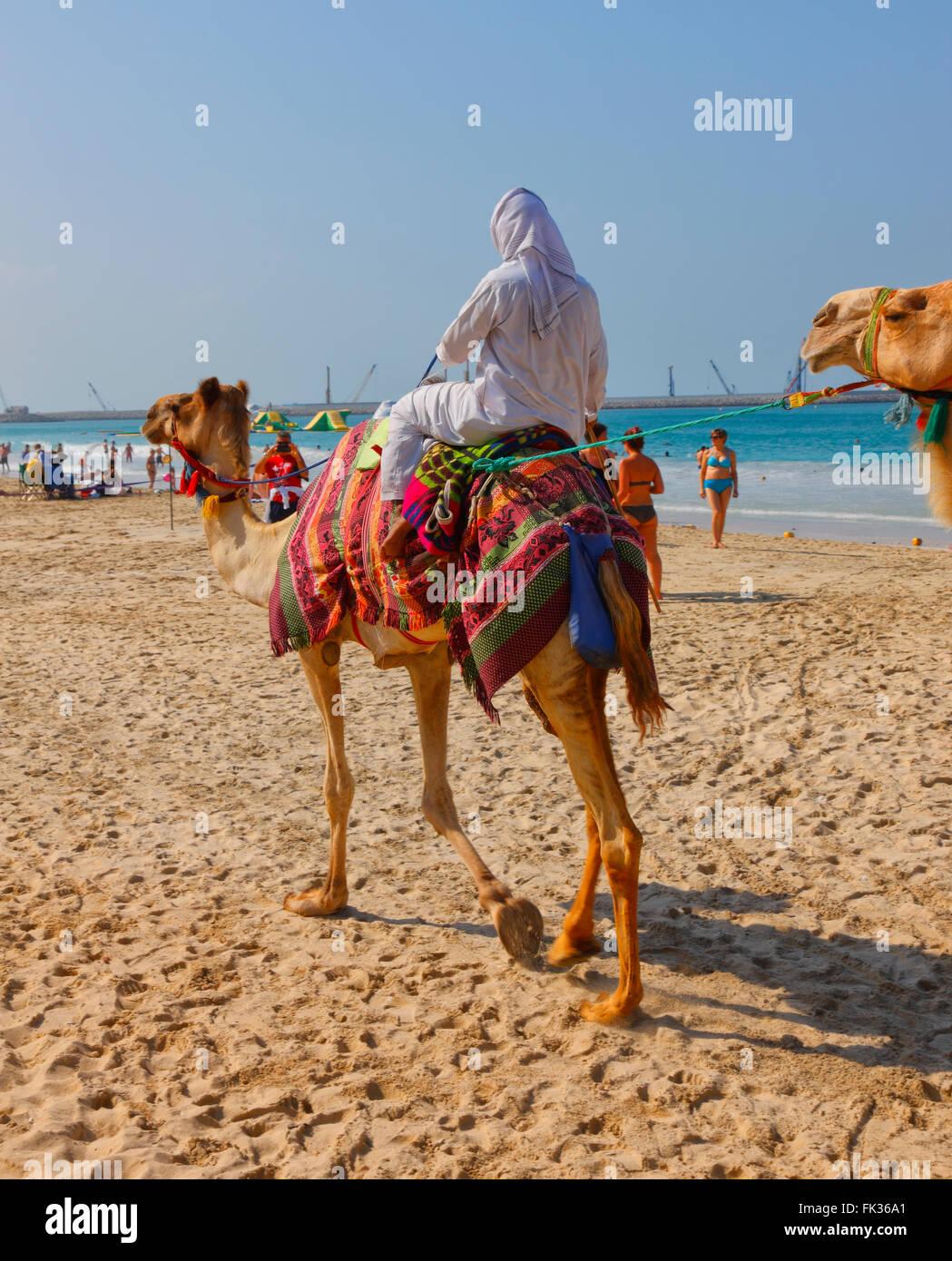 Camel on the Jumeirah beach, Dubai - Stock Image