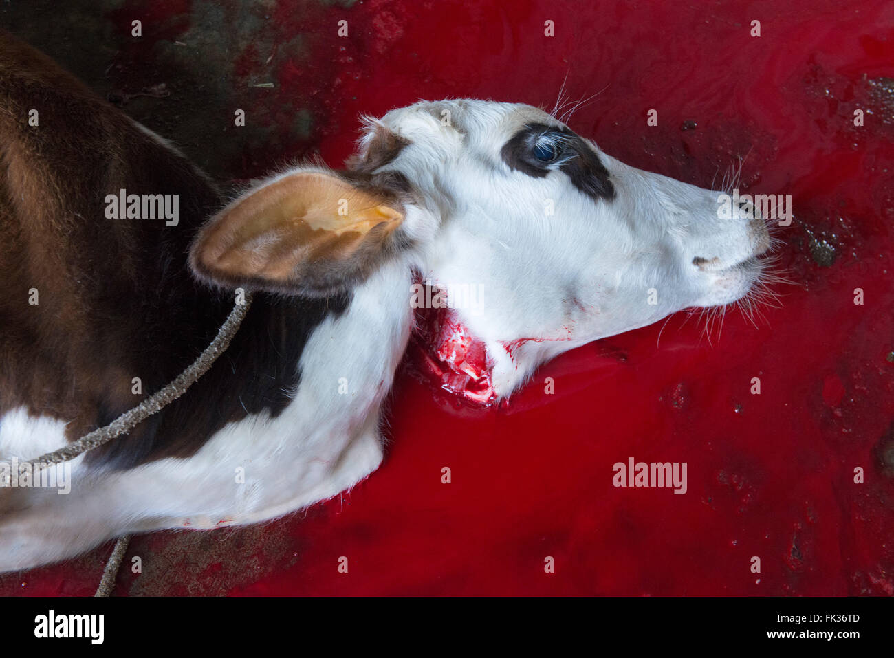 Halal Slaughter Stock Photos & Halal Slaughter Stock Images - Alamy