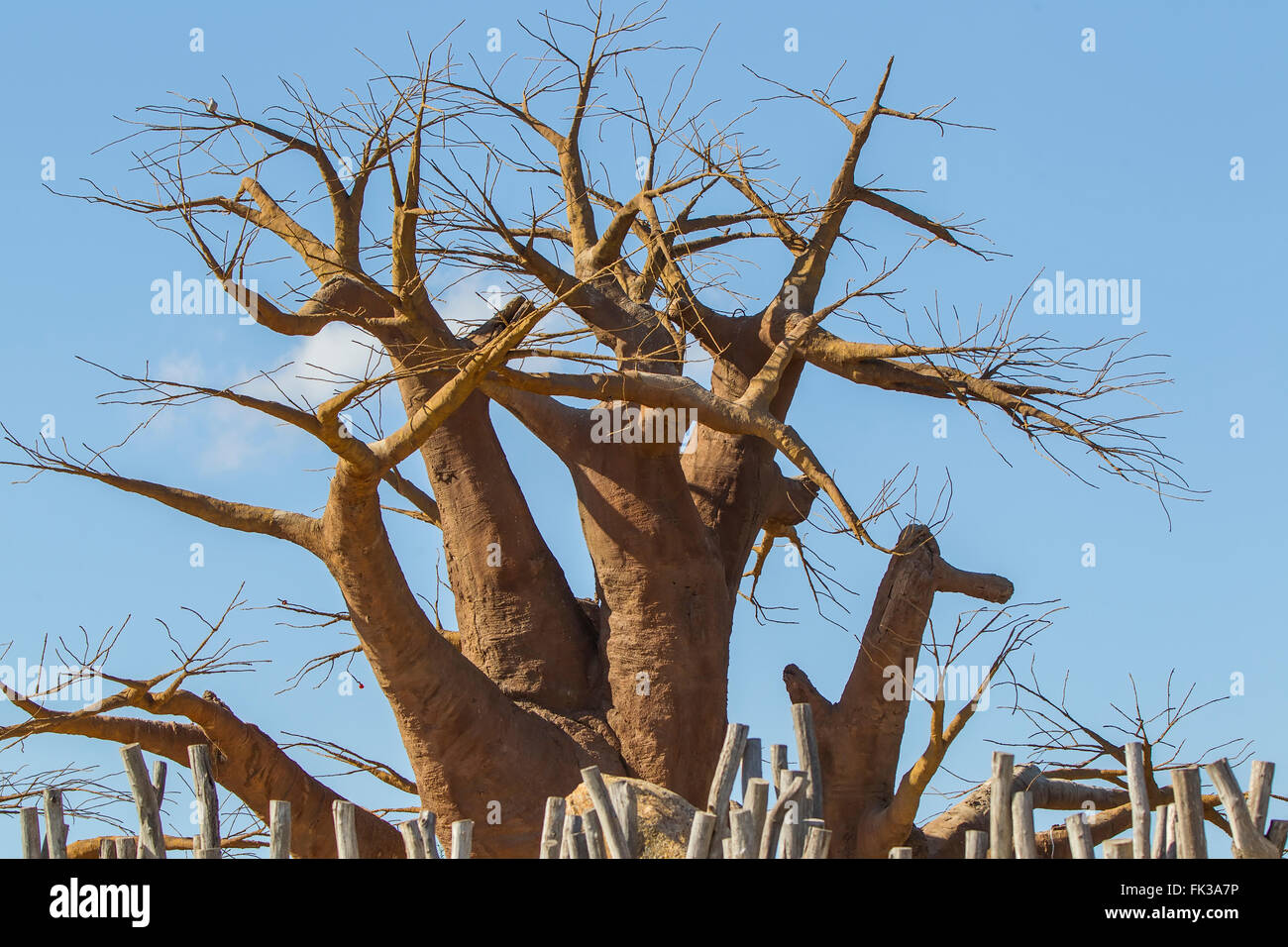"Baobab tree, boab boaboa ""upside-down tree""  West Africa - Stock Image"