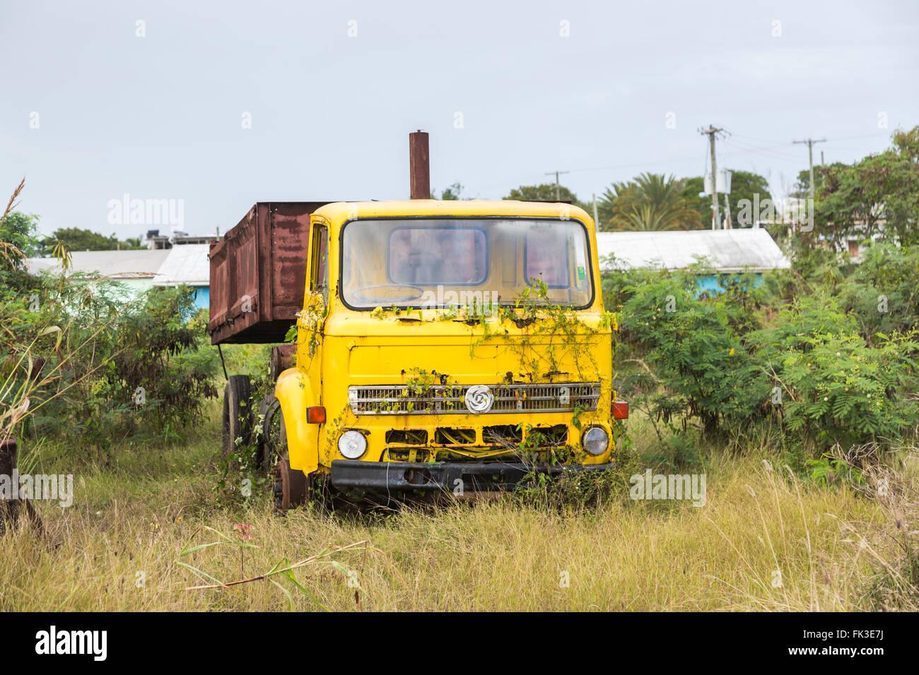 Overgrown, rusting yellow Leyland tipper truck in Ogg Spencer's Trucking scrapyard, Liberta, south Antigua, - Stock Image
