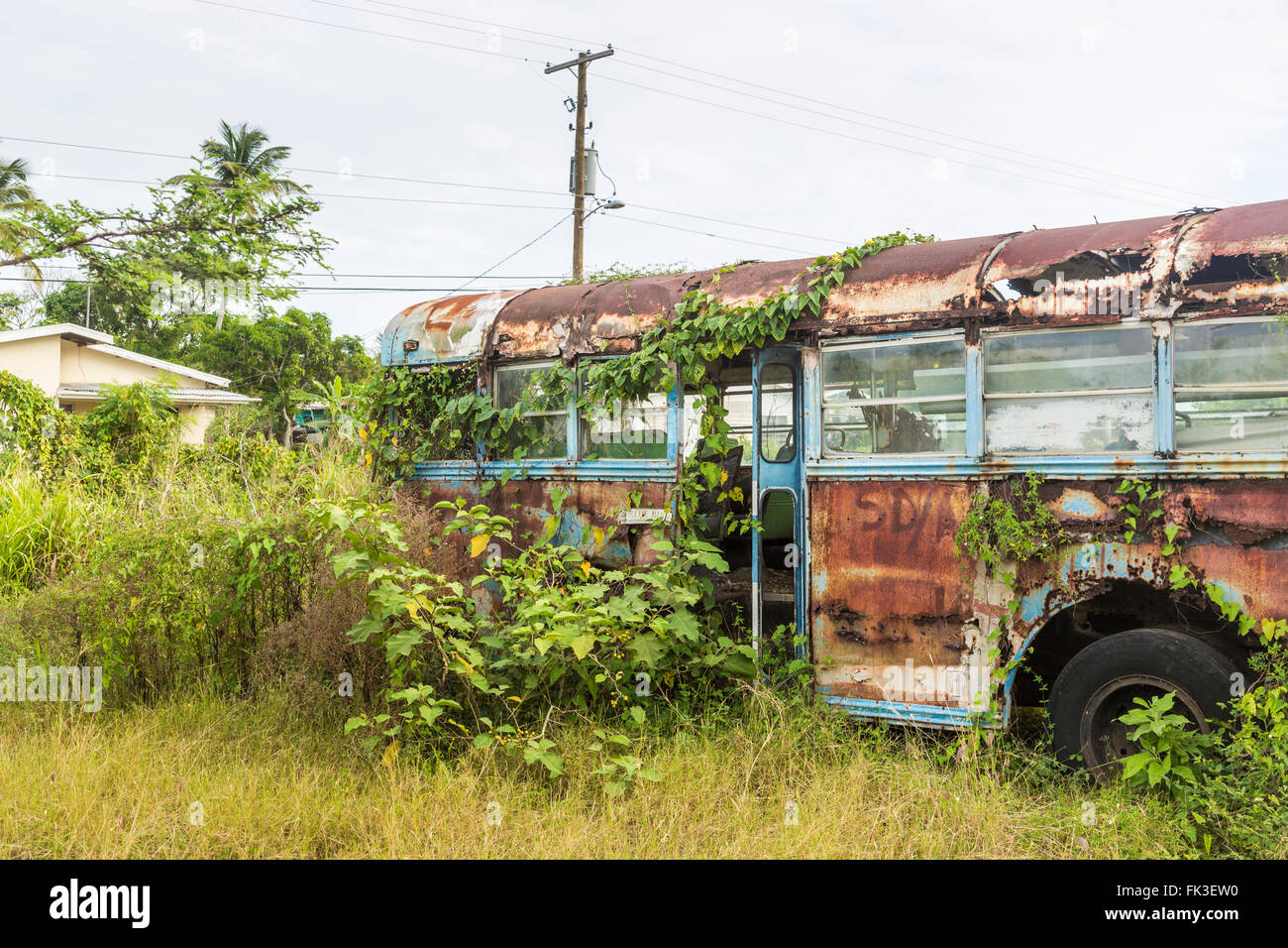 Overgrown Blue Bird coach in Ogg Spencer's Trucking scrapyard, Liberta, south Antigua, Antigua and Barbuda, - Stock Image