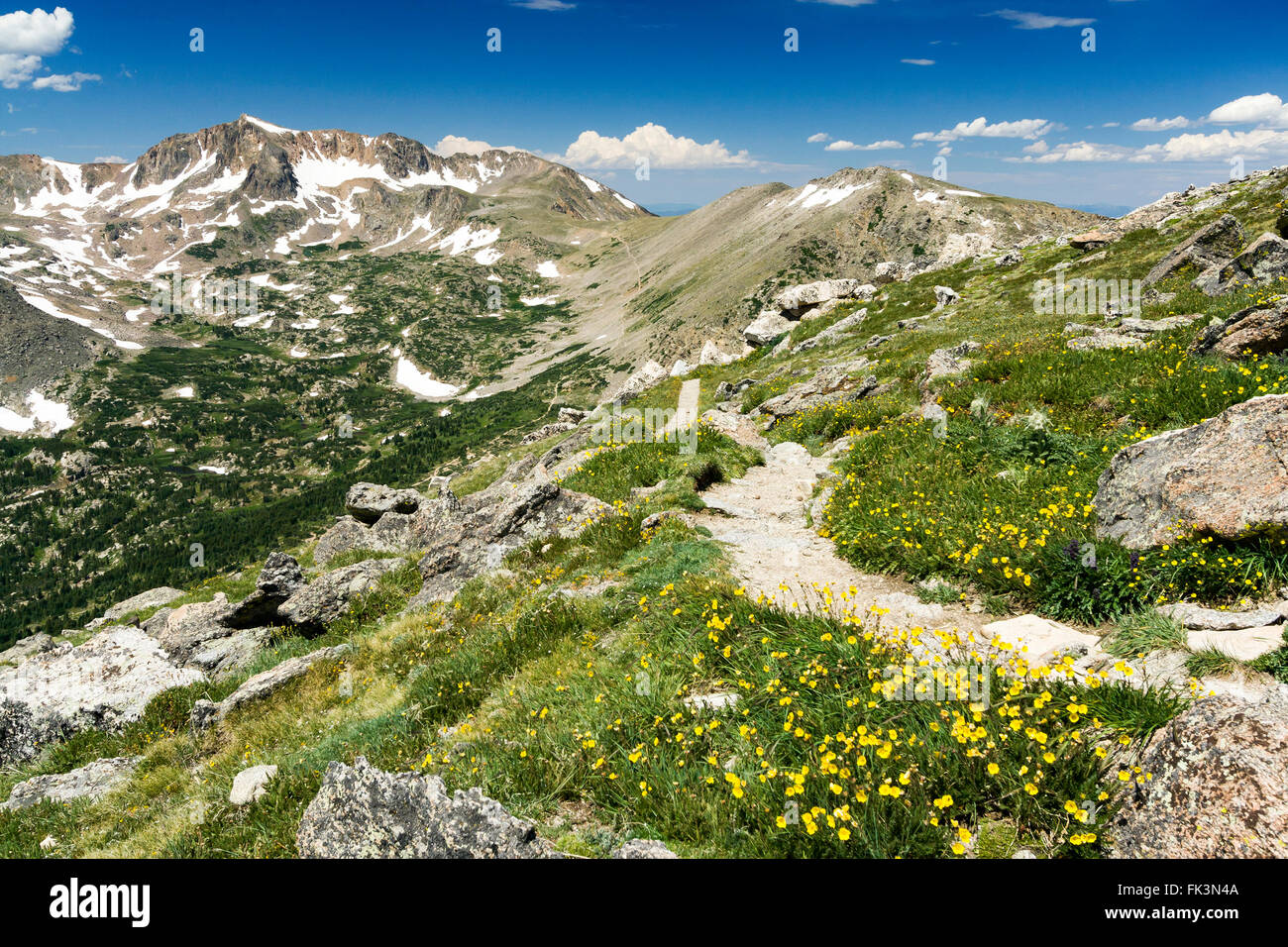 Arapaho Glacier Trail Crosses the Continental Divide High in the Colorado Rocky Mountains with Summer Wildflowers - Stock Image