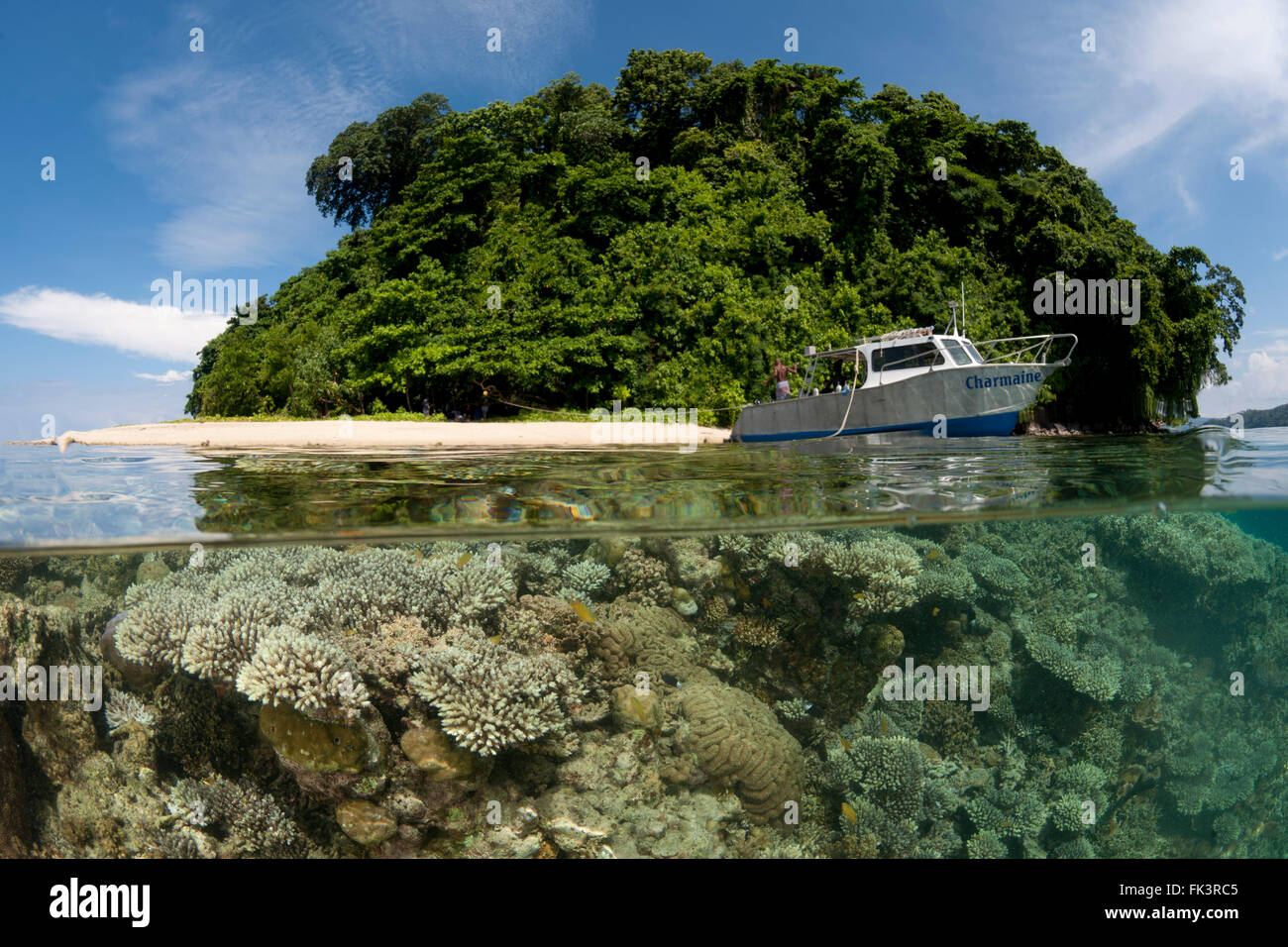 Split level of dive boat in Restoff Island showing healthy coral reef rising all the way to the top and the drop Stock Photo