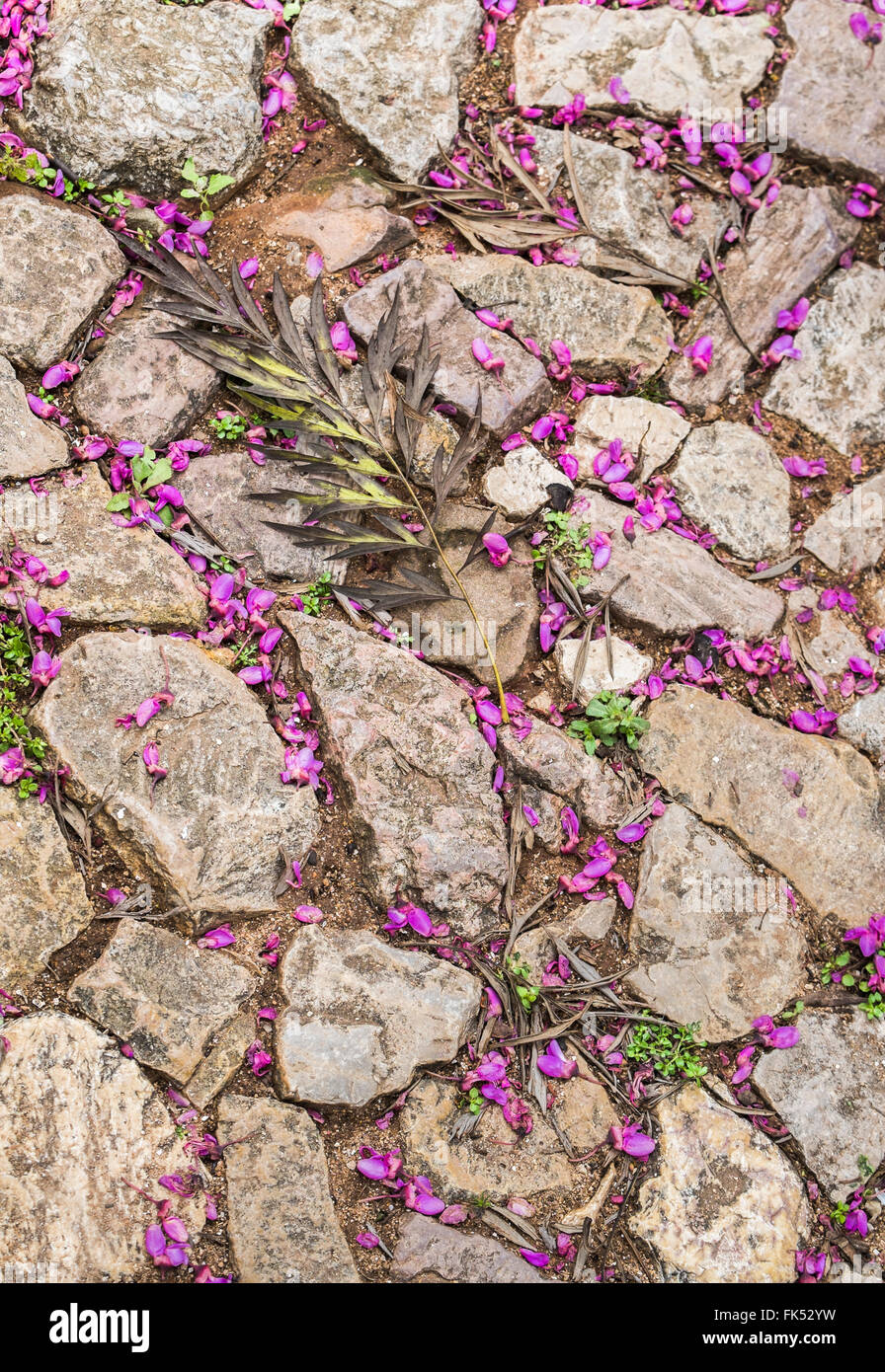 twig and petals on natural stone floor - Stock Image