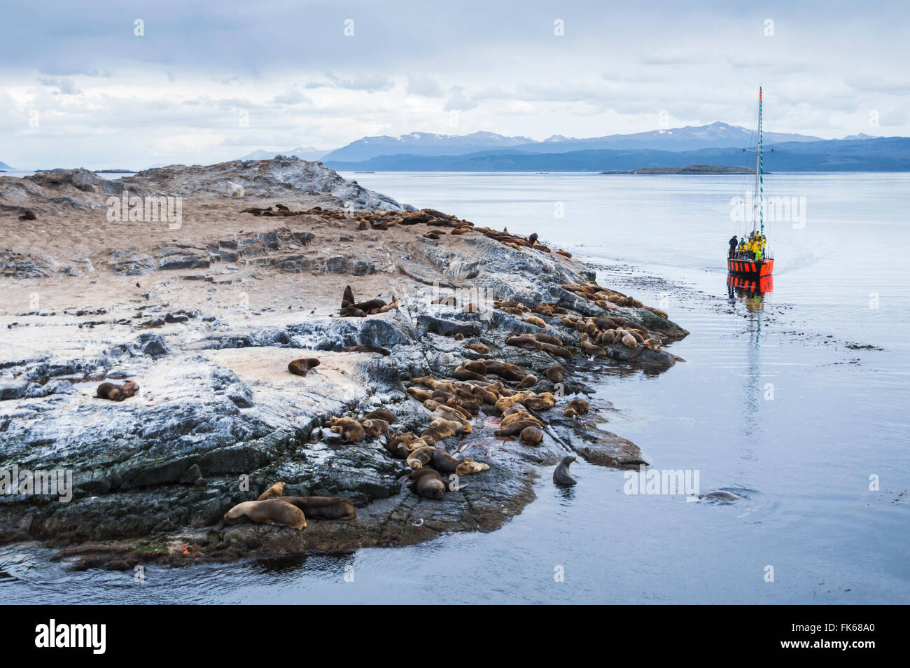 Beagle Channel sailing boat observing Sea Lion colony, Ushuaia, Tierra Del Fuego, Patagonia, Argentina, South America - Stock Image