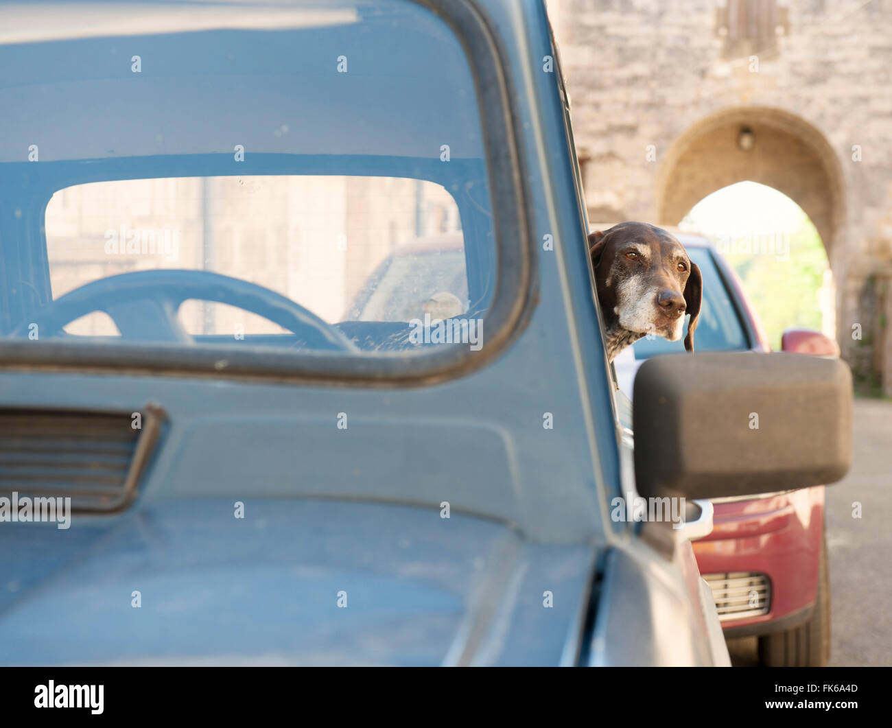 A dog waits patiently for its owner in a classic French Renault 4, France, Europe - Stock Image