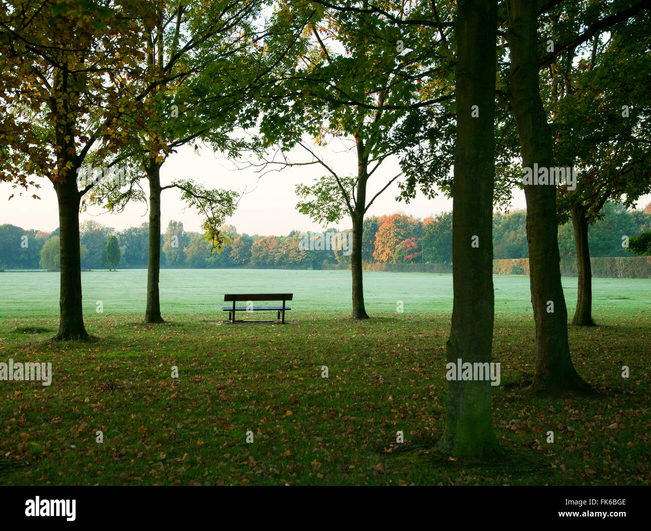 Park bench and trees in autumn, United Kingdom, Europe - Stock Image