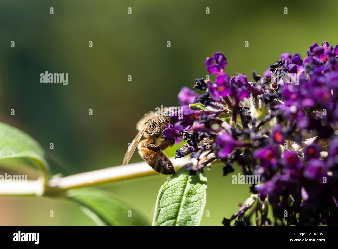 Butterfly in garden - Stock Image