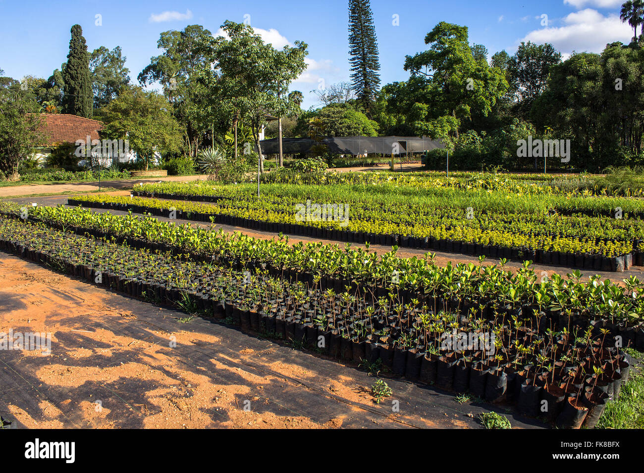Seedlings ready for distribution - Nursery Manequinho Lopes - Ibirapuera Park - Stock Image