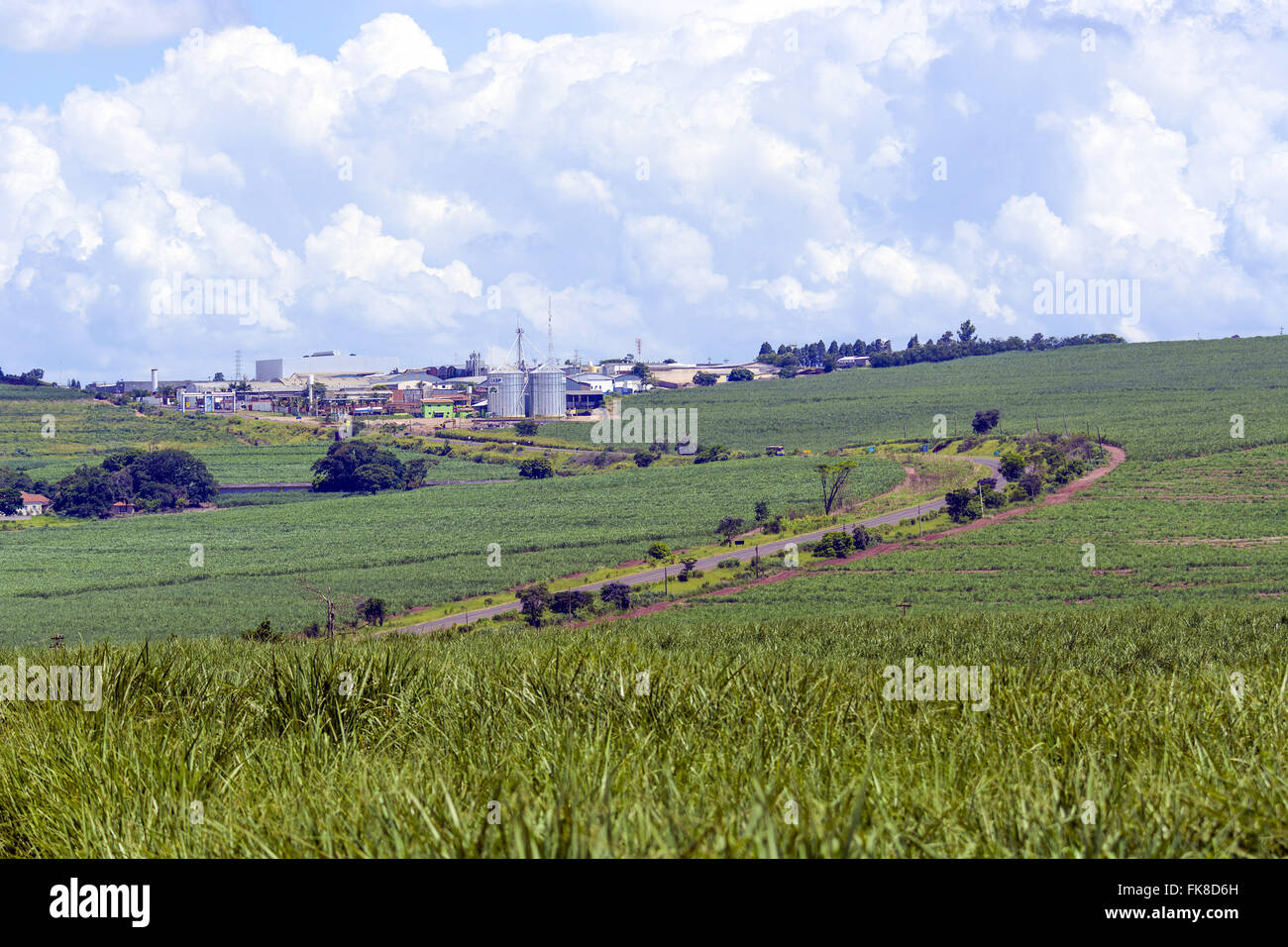Sugarcane plantation with urban area to the bottom - Stock Image