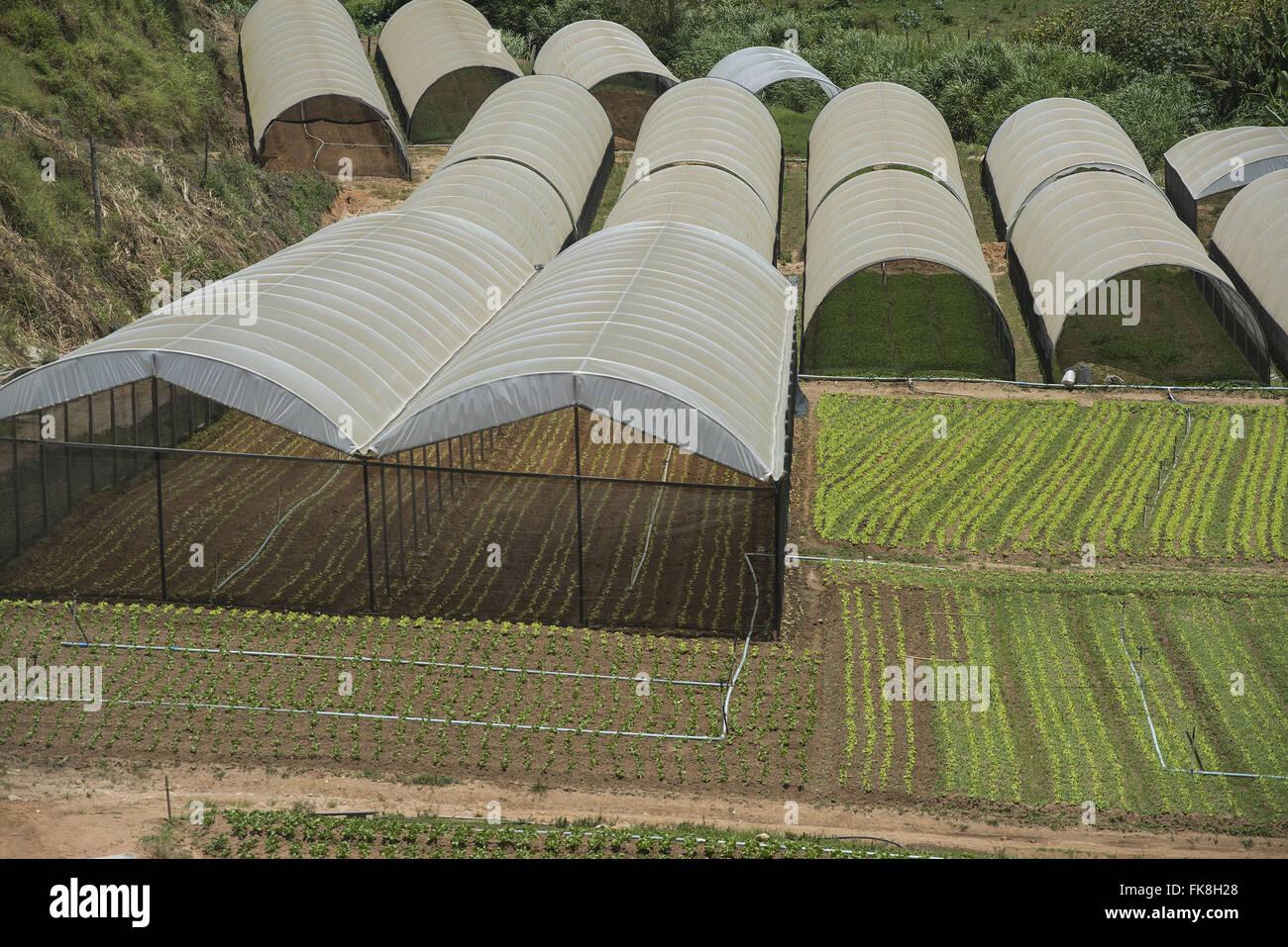 Seedling greenhouses for vegetable production in Vargem Grande neighborhood - Stock Image