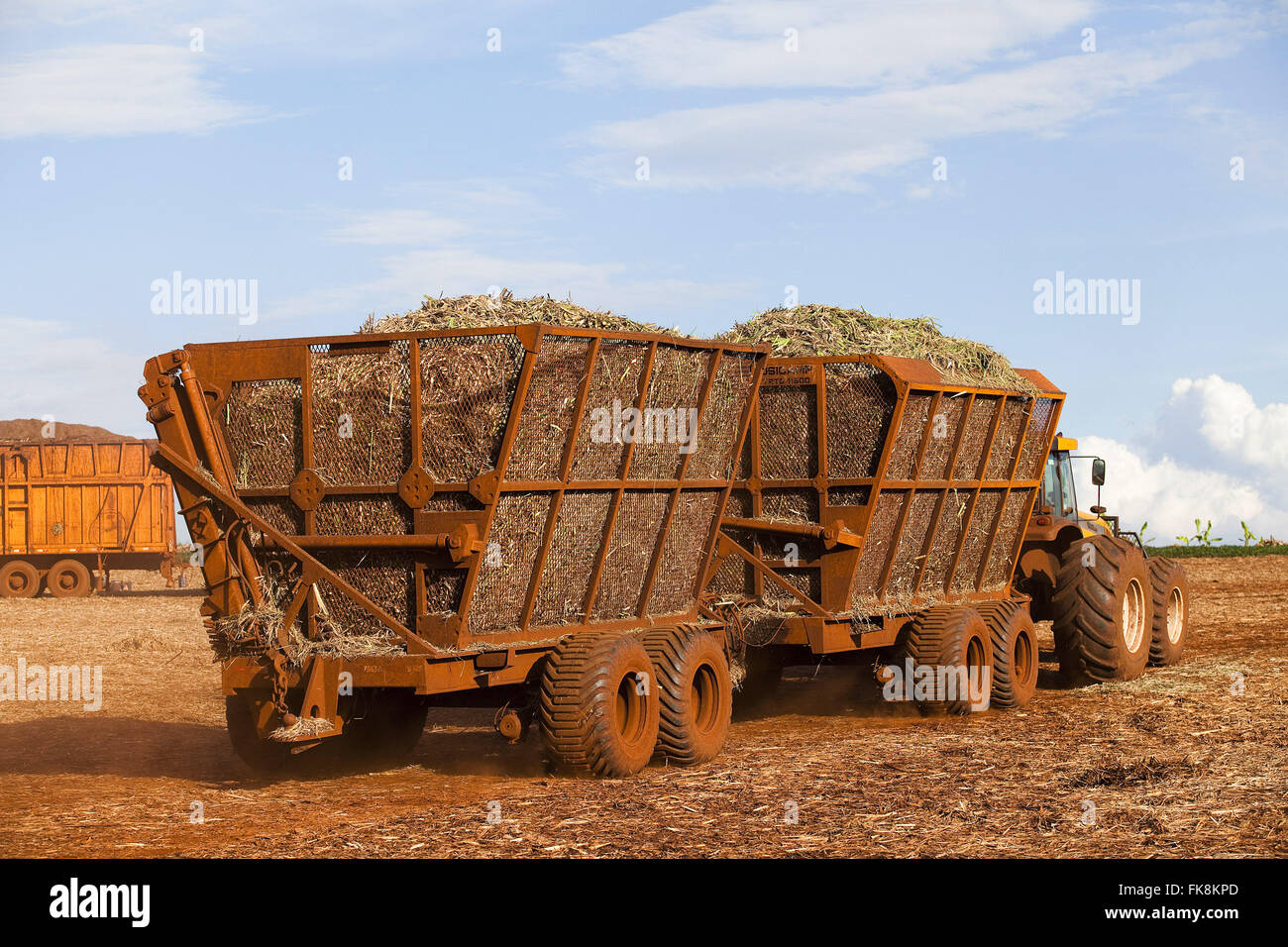 Tractor hauling sugar cane after mechanical harvest in the countryside - Stock Image