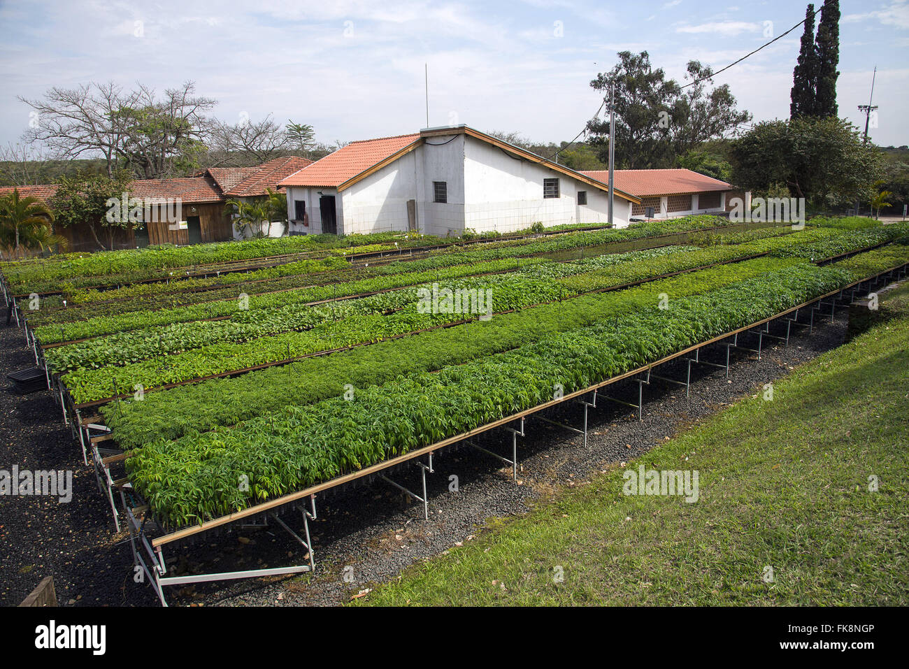Nursery with native seedlings for reforestation of the Atlantic Forest - Stock Image