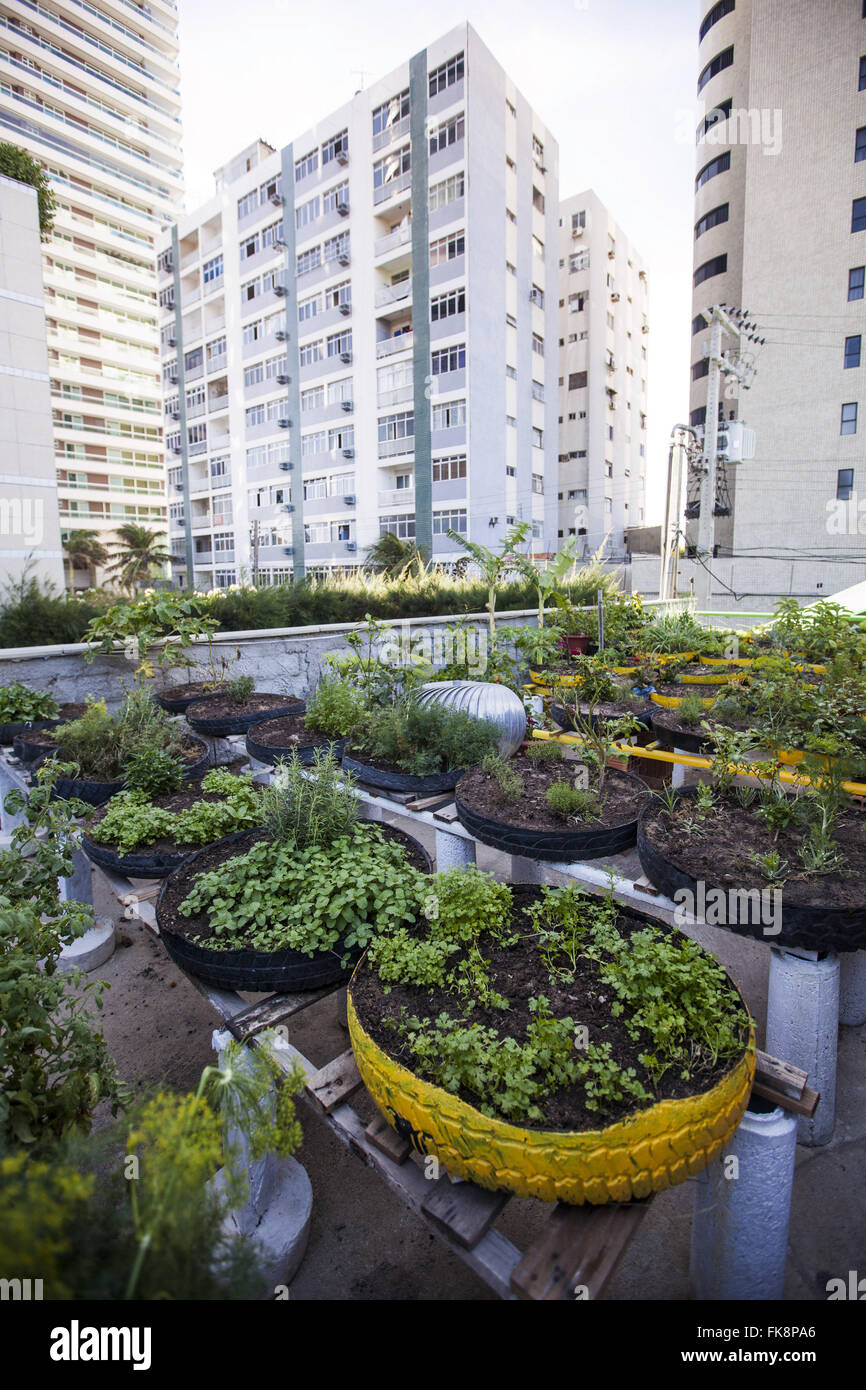 Community organic vegetable garden condominium in the city - Stock Image