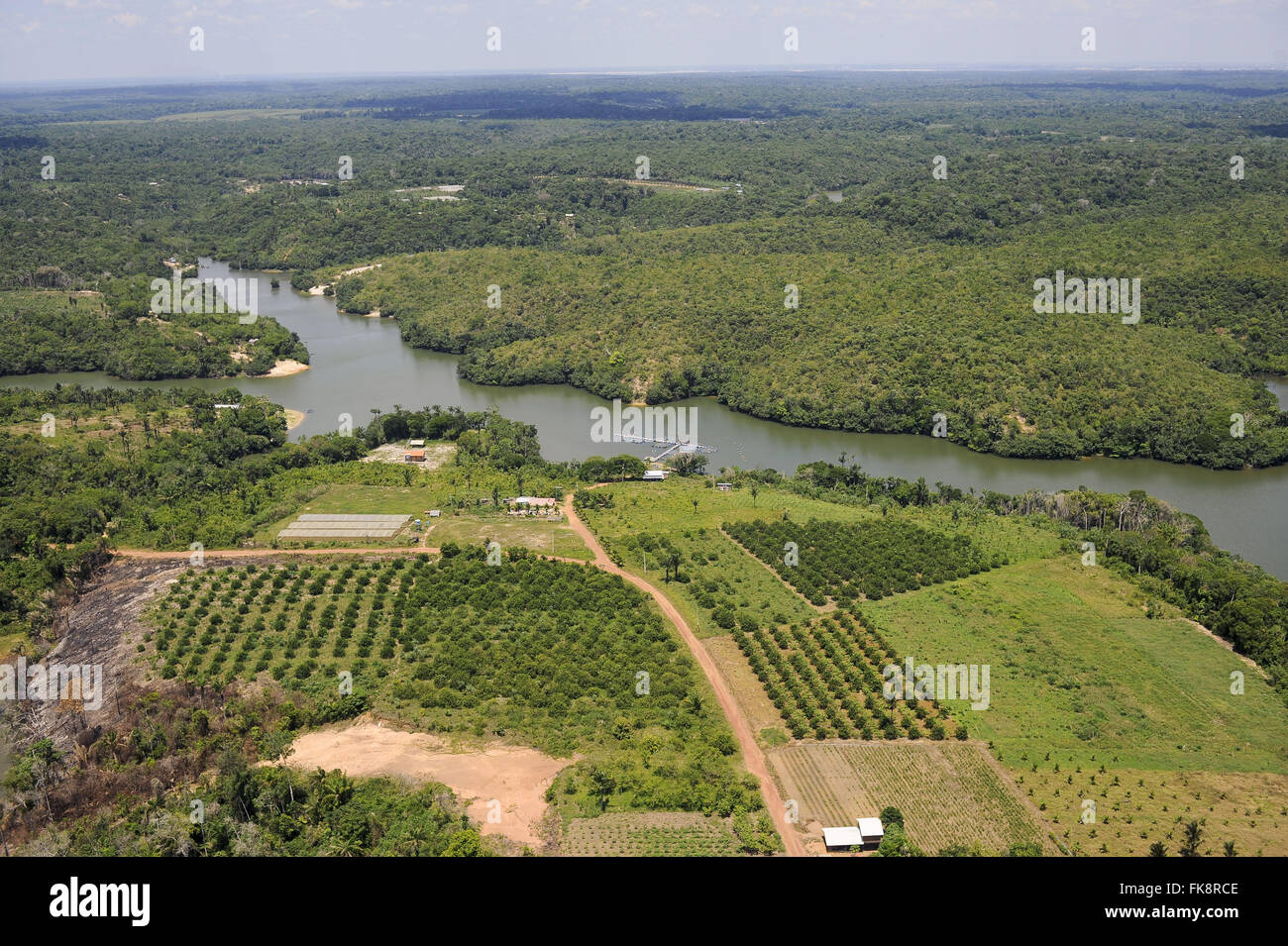 Aerial view of orange groves on the banks of the Rio Negro igarapé - Stock Image