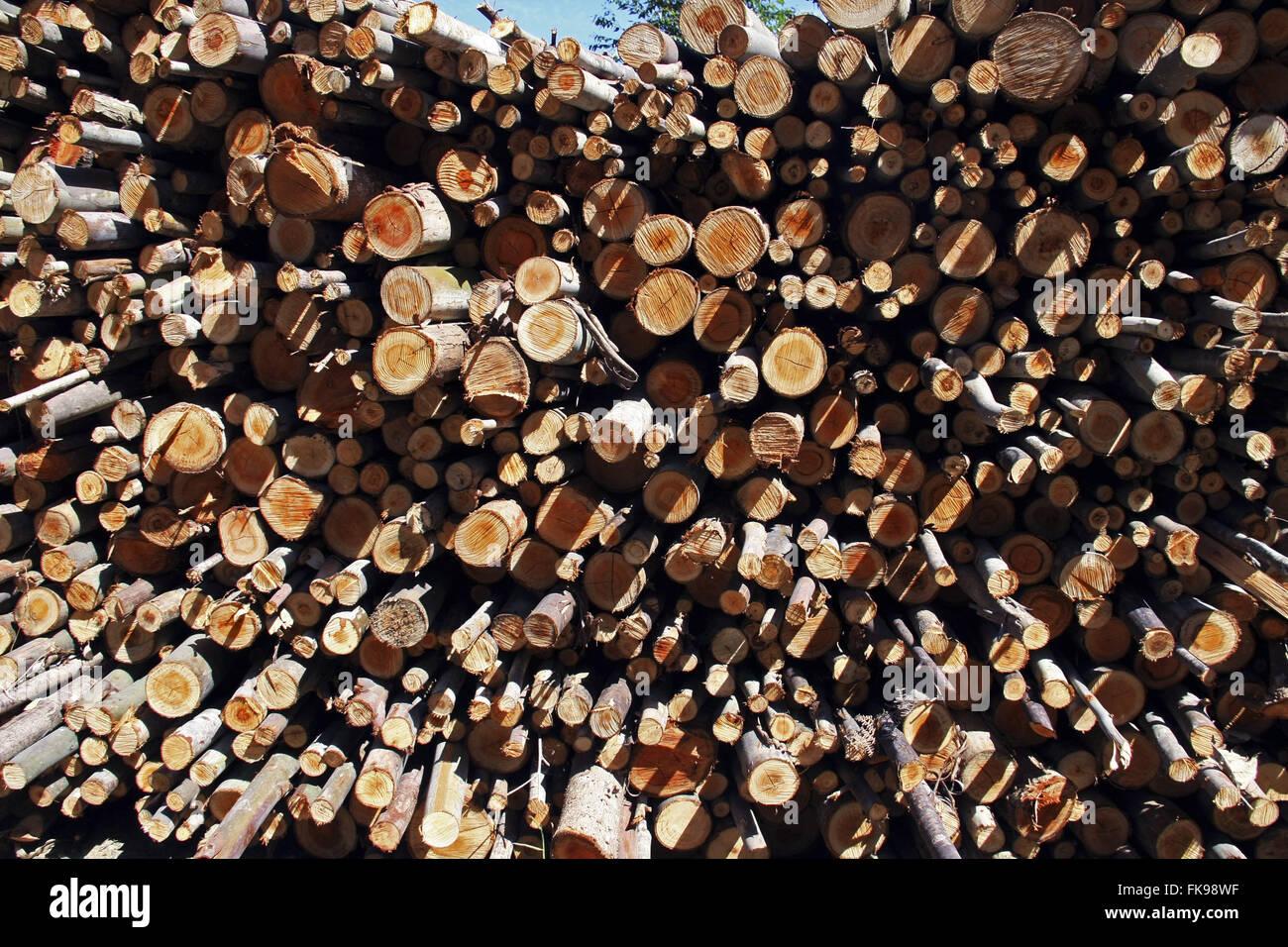 Eucalyptus stacked for use as firewood - Eucalyptus - Stock Image