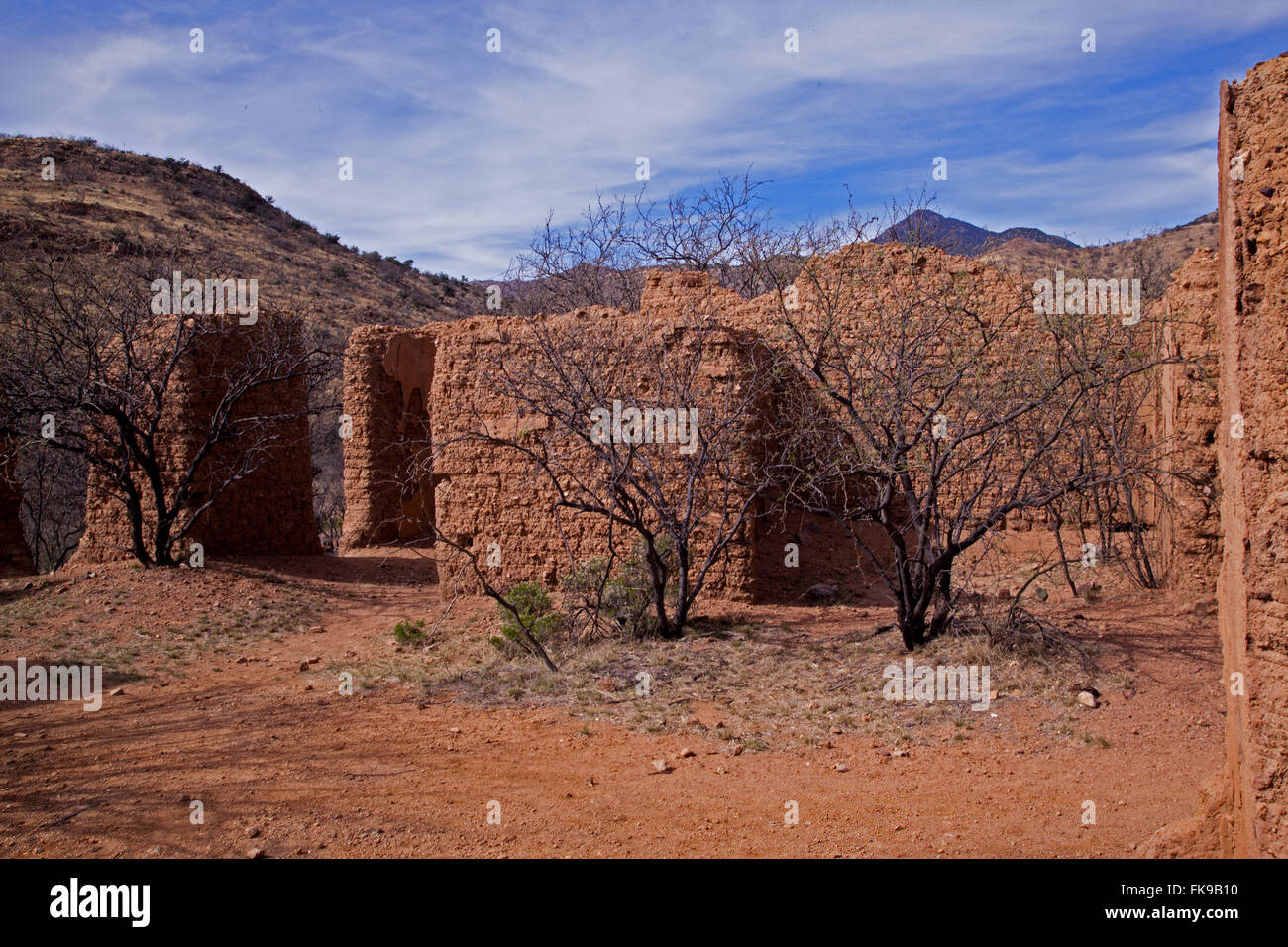 Alto Arizona, a ghost town interior of the adobe mud walls with scrub oak growing in the interior of the Bond home/postoffice. - Stock Image