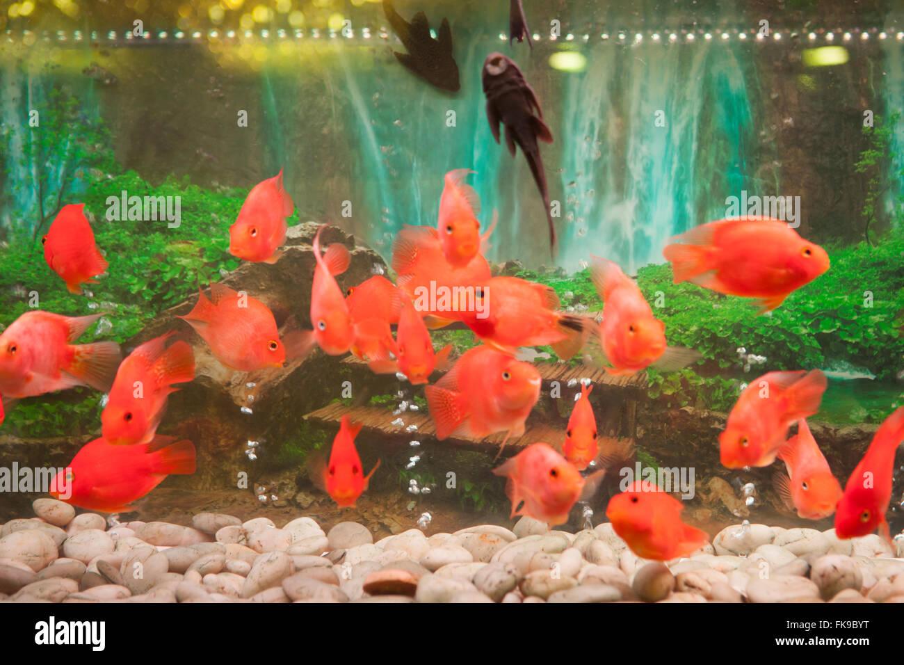 Fish Tank Stock Photos & Fish Tank Stock Images - Alamy