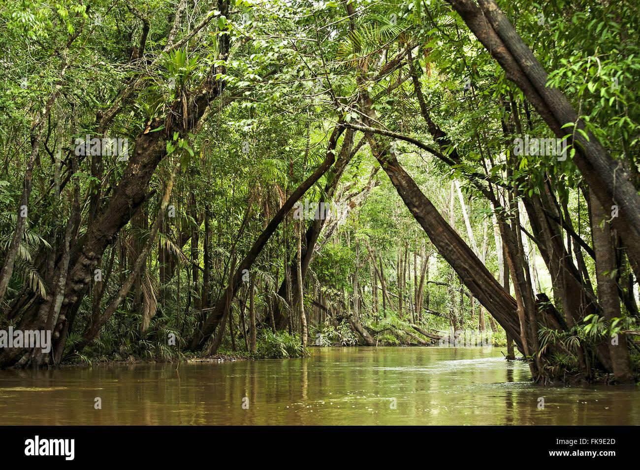 Igarape in the Amazon region - Stock Image
