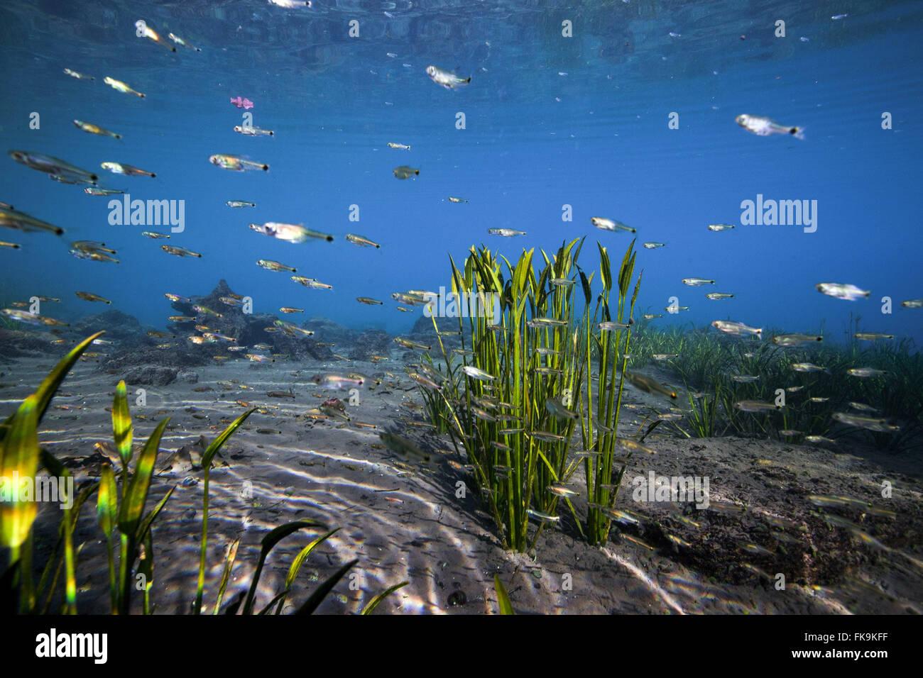 Eye, â the Urania water - spring water in the backlands of Bahia Chapada Diamantina - Stock Image