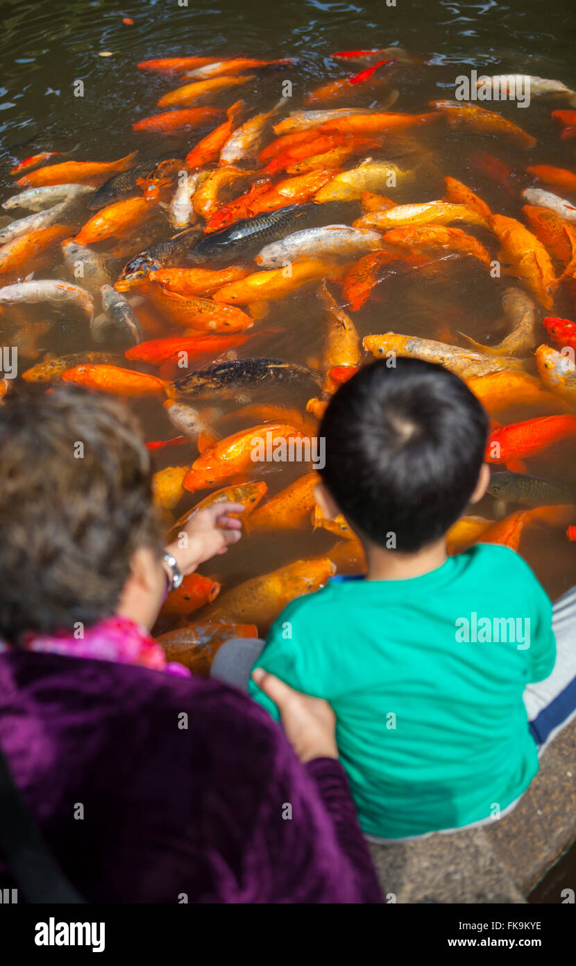 visitors watch the koi in the decorative pond, Yuyuan Garden, Shanghai, China Stock Photo