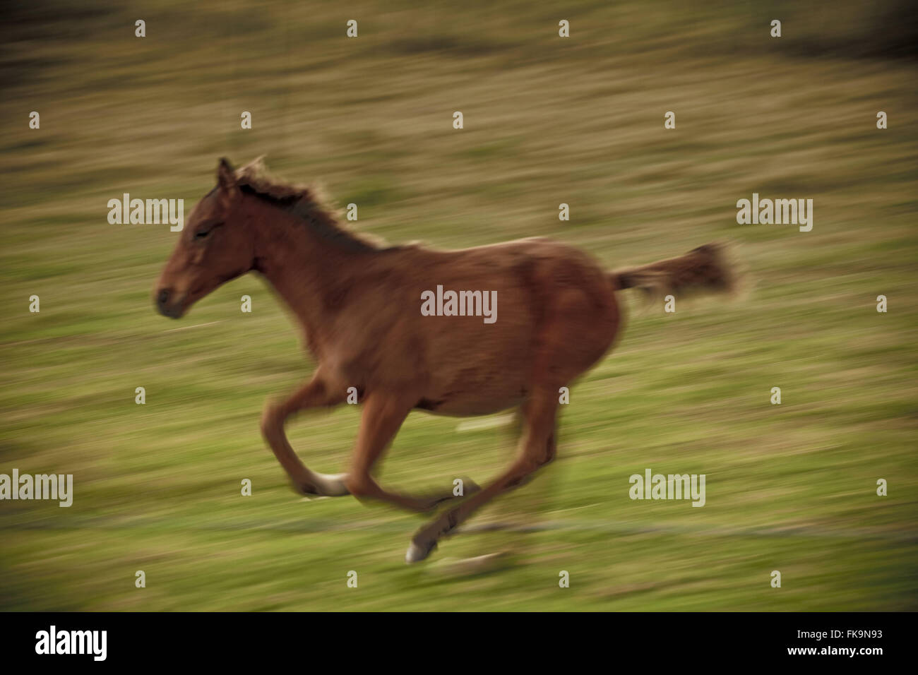 PSI Horse - Thoroughbred created an estancia in the countryside of Rivera in Uruguay Stock Photo
