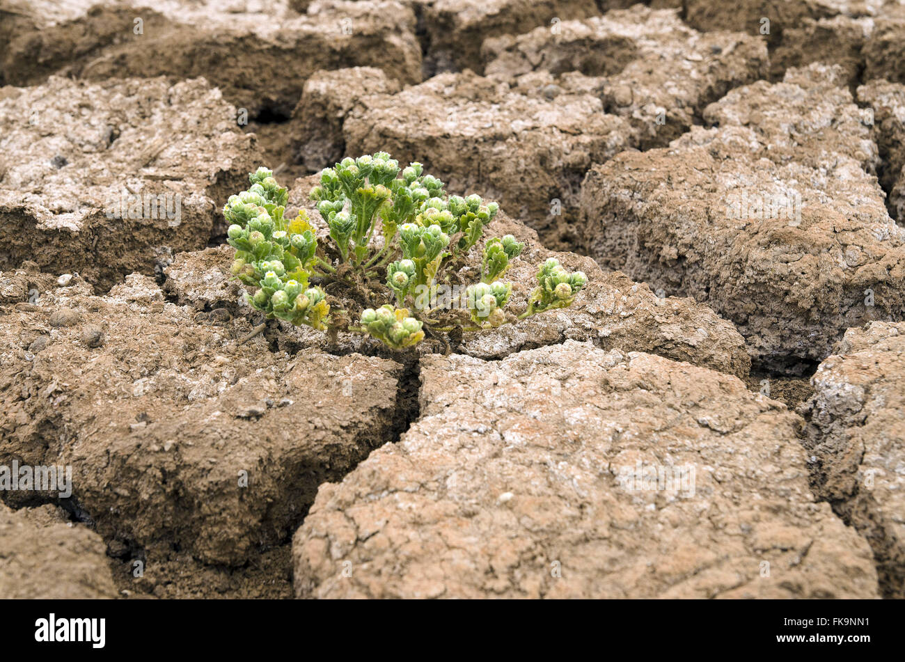 Vegetation sprouting in Puiu lagoon in the dry season - Catimbau National Park - Stock Image