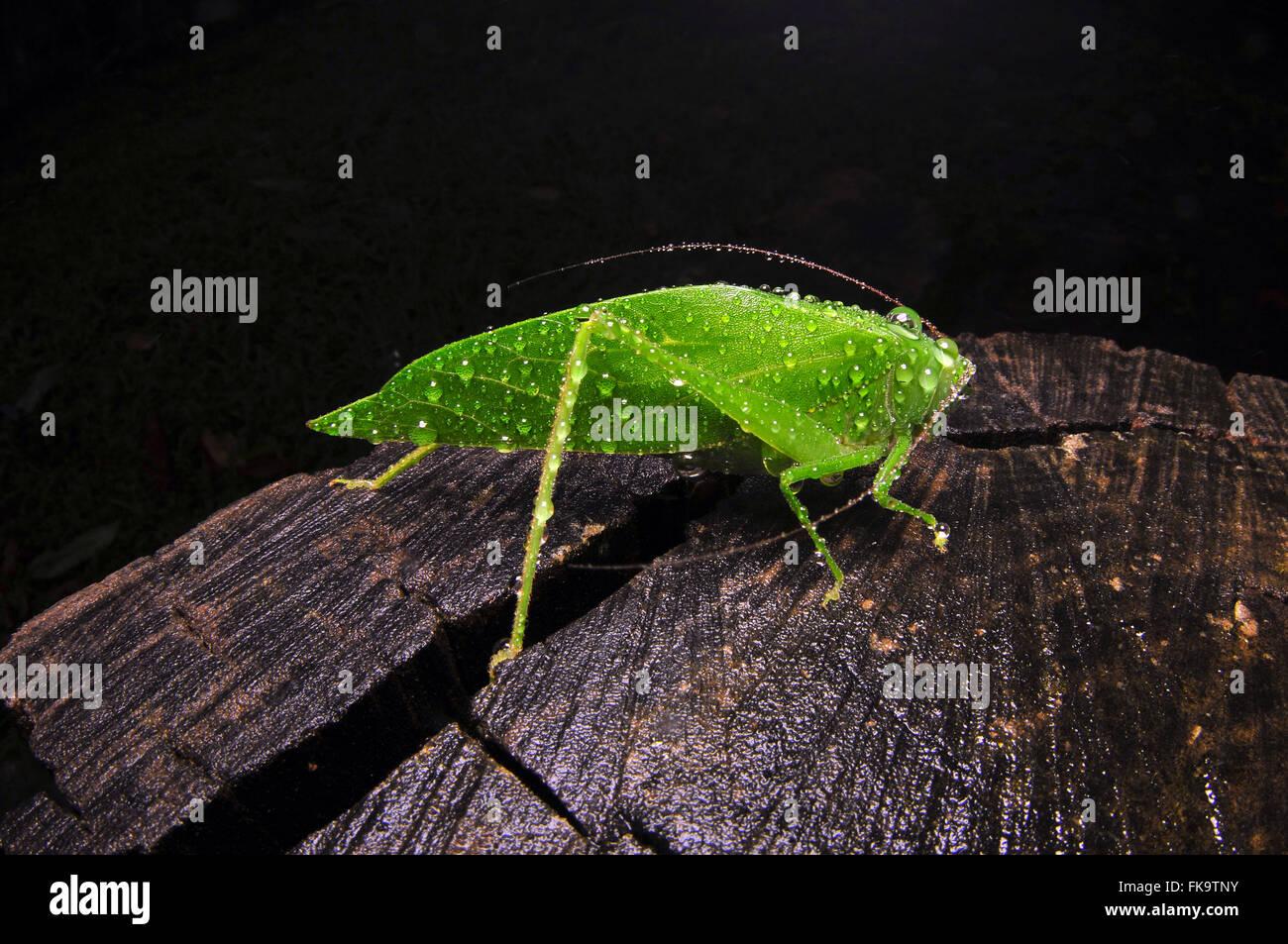 Silkworm sheet - Stock Image